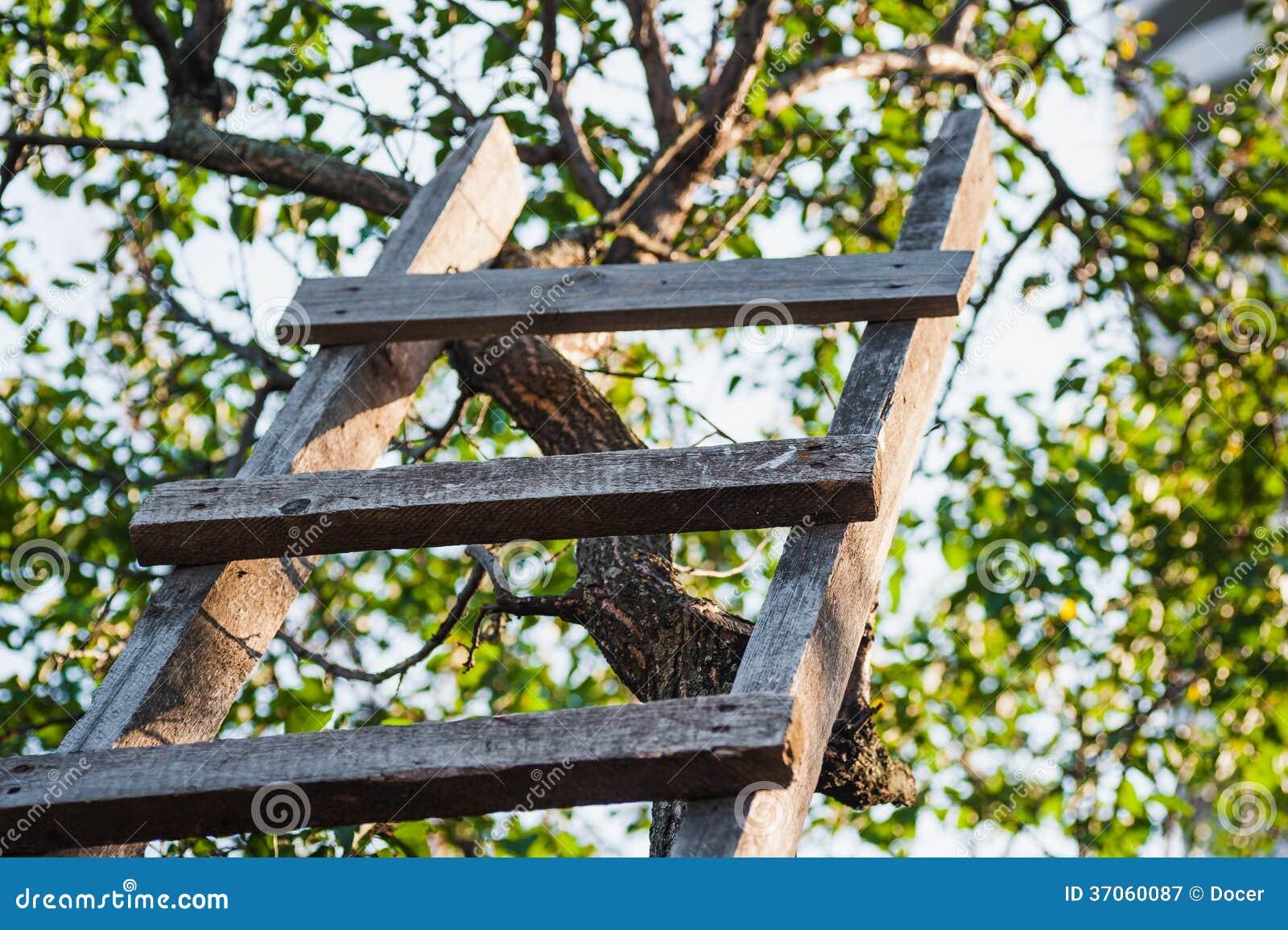 Scala reale all 39 albero da frutto in giardino verde - Albero da giardino ...