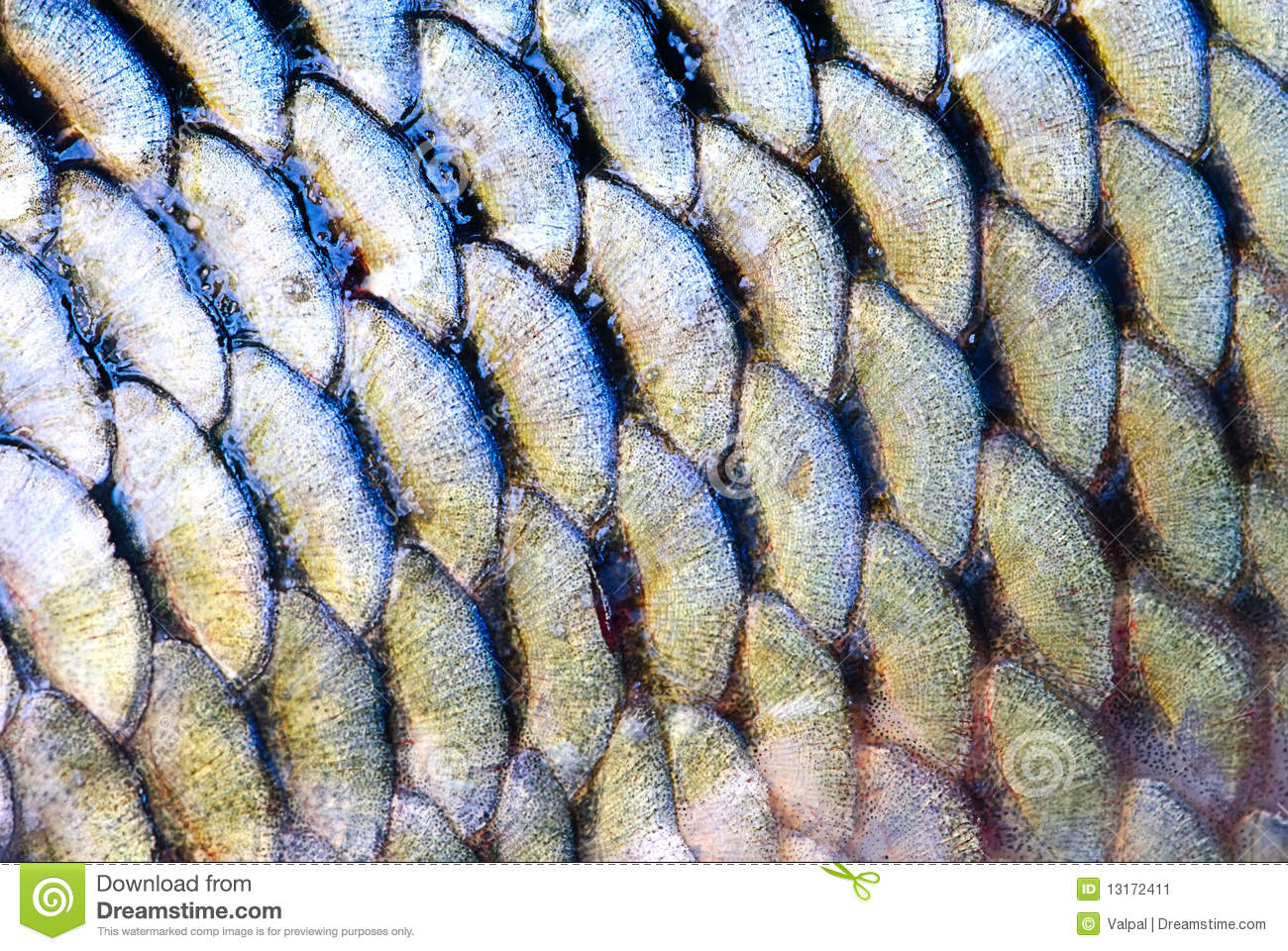 Scale of fish stock image image 13172411 for Mlf fishing scale