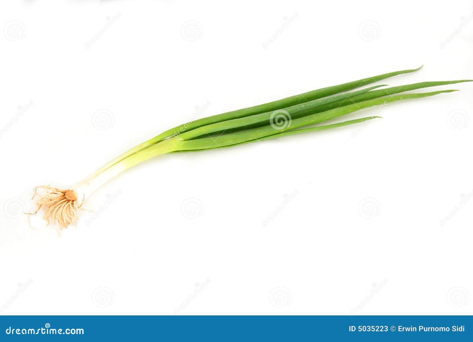 Scallion or spring onion