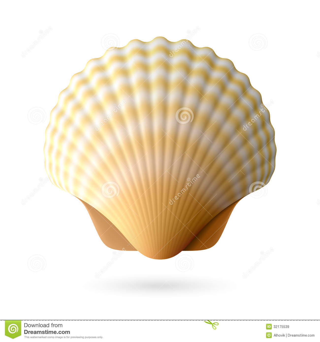 Scallop Seashell Royalty Free Stock Images - Image: 32175539