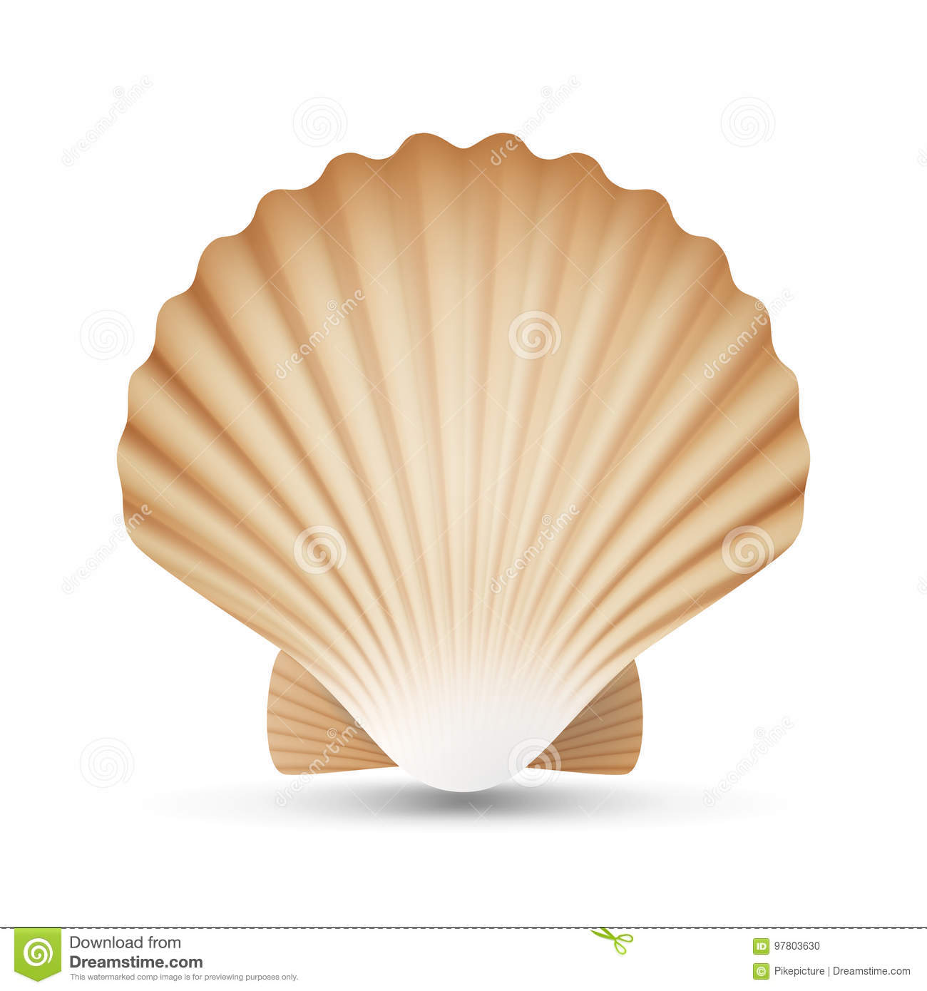 Scallop shell stock illustrations 3345 scallop shell stock scallop shell stock illustrations 3345 scallop shell stock illustrations vectors clipart dreamstime biocorpaavc Image collections