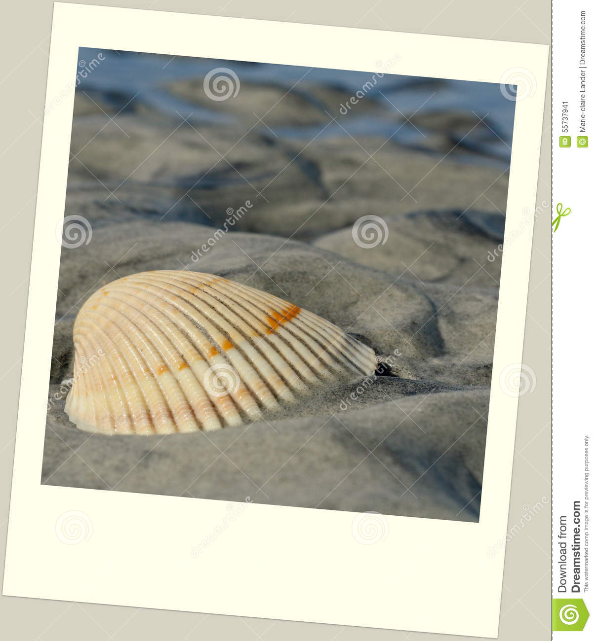 Scallop Shell On Beach In Polaroid Frame Stock Image Image Of
