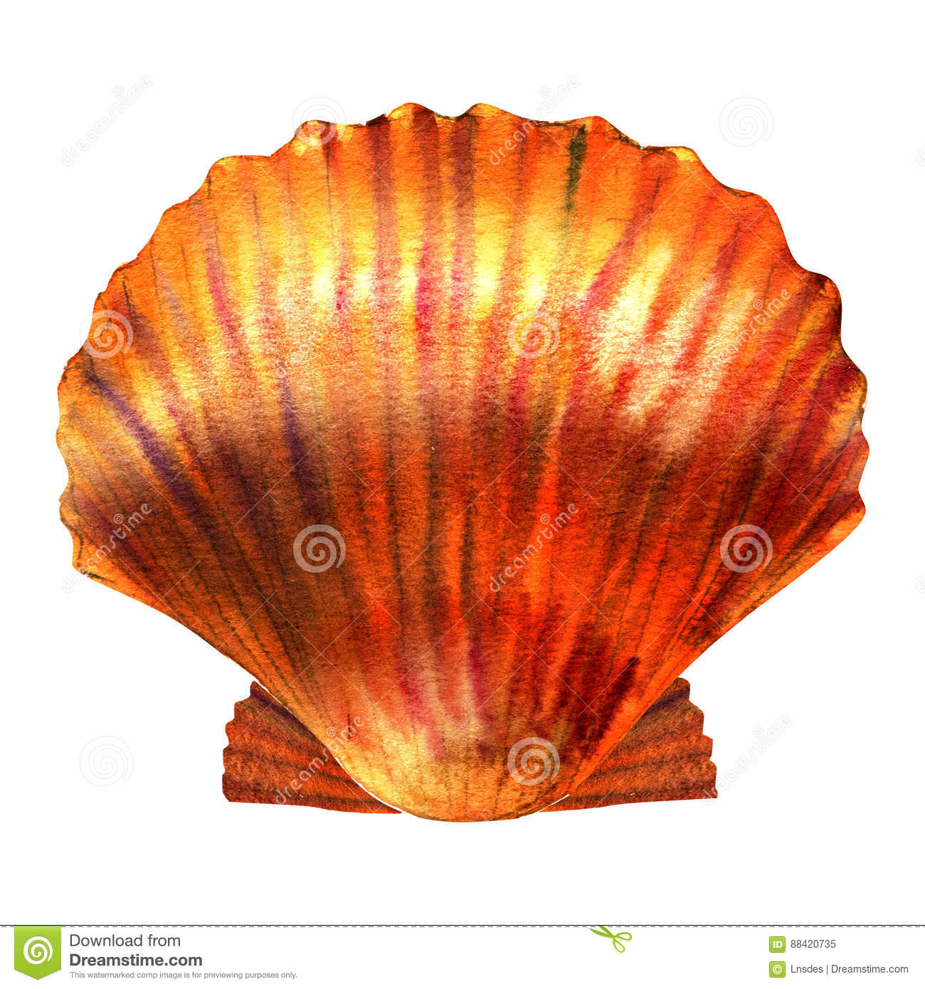 Scallop shell stock illustrations 3345 scallop shell stock scallop shell seashell isolated watercolor illustration on white background royalty free stock biocorpaavc Image collections