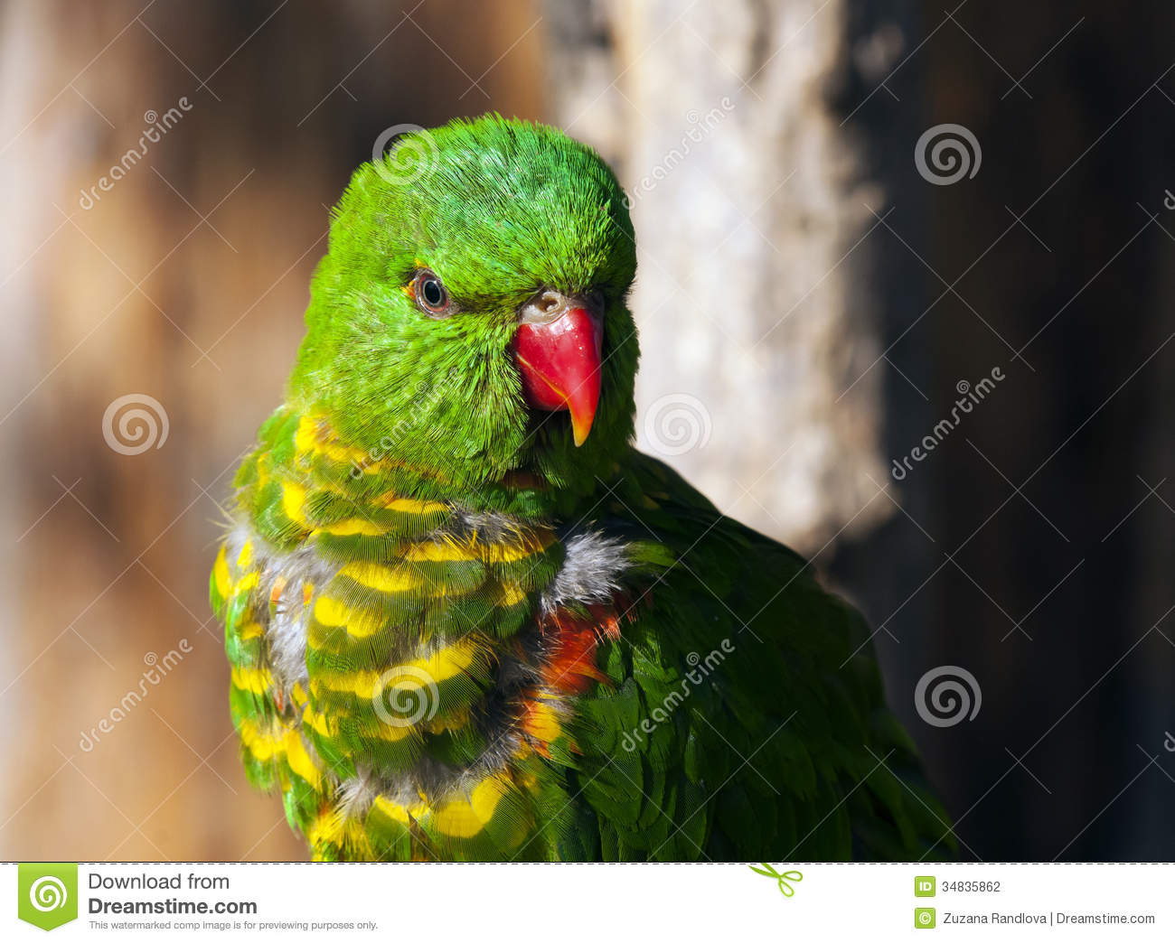 Green birds names - photo#12