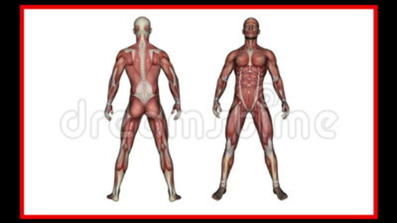 Scan Of Human Anatomy , Male Muscles Stock Video - Video of body ...