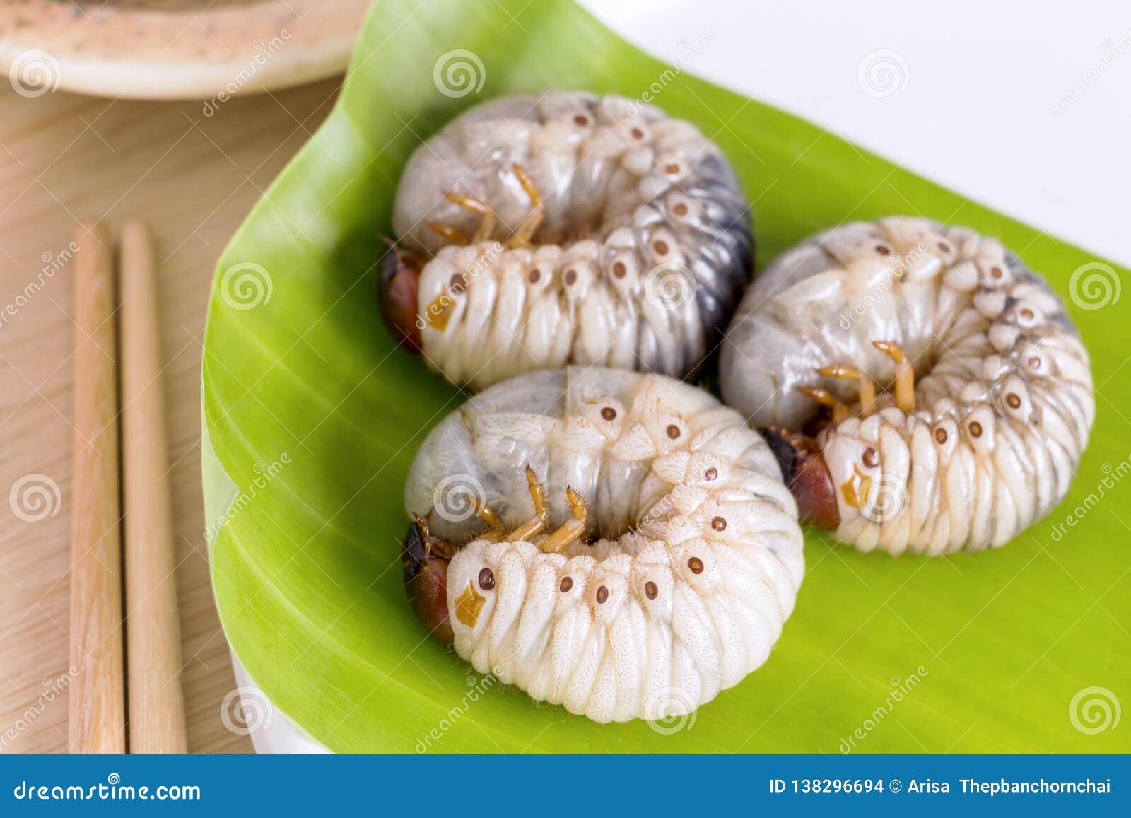 Scarabée de ver de ver ou de rhinocéros d Oryctes La nourriture d insectes pour manger les larves cuites frites ou cuites au four