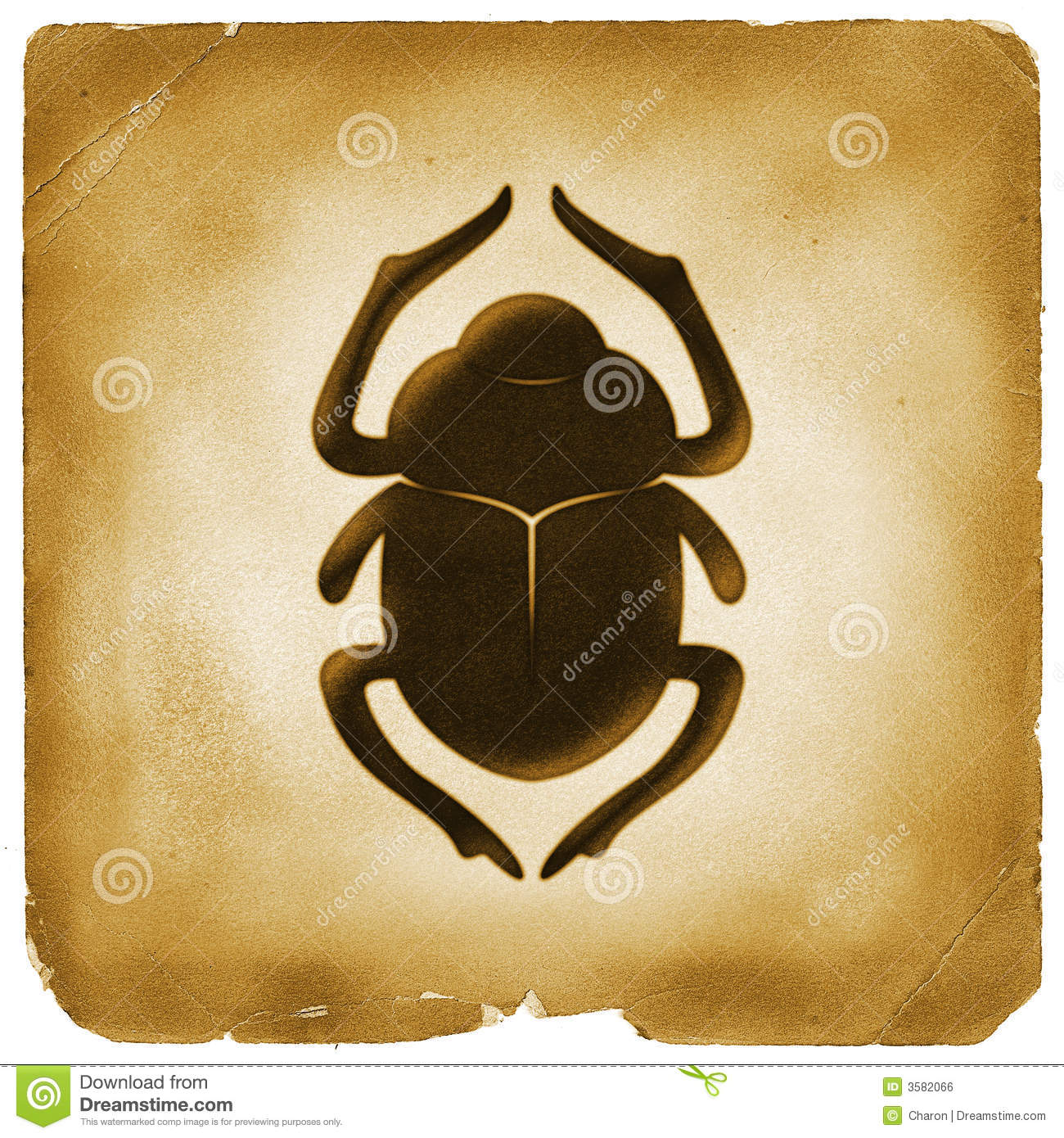 Scarab  Scarabaeidae  Dung beetle   used in ancient Egypt as a symbol    Egyptian Symbols Scarab