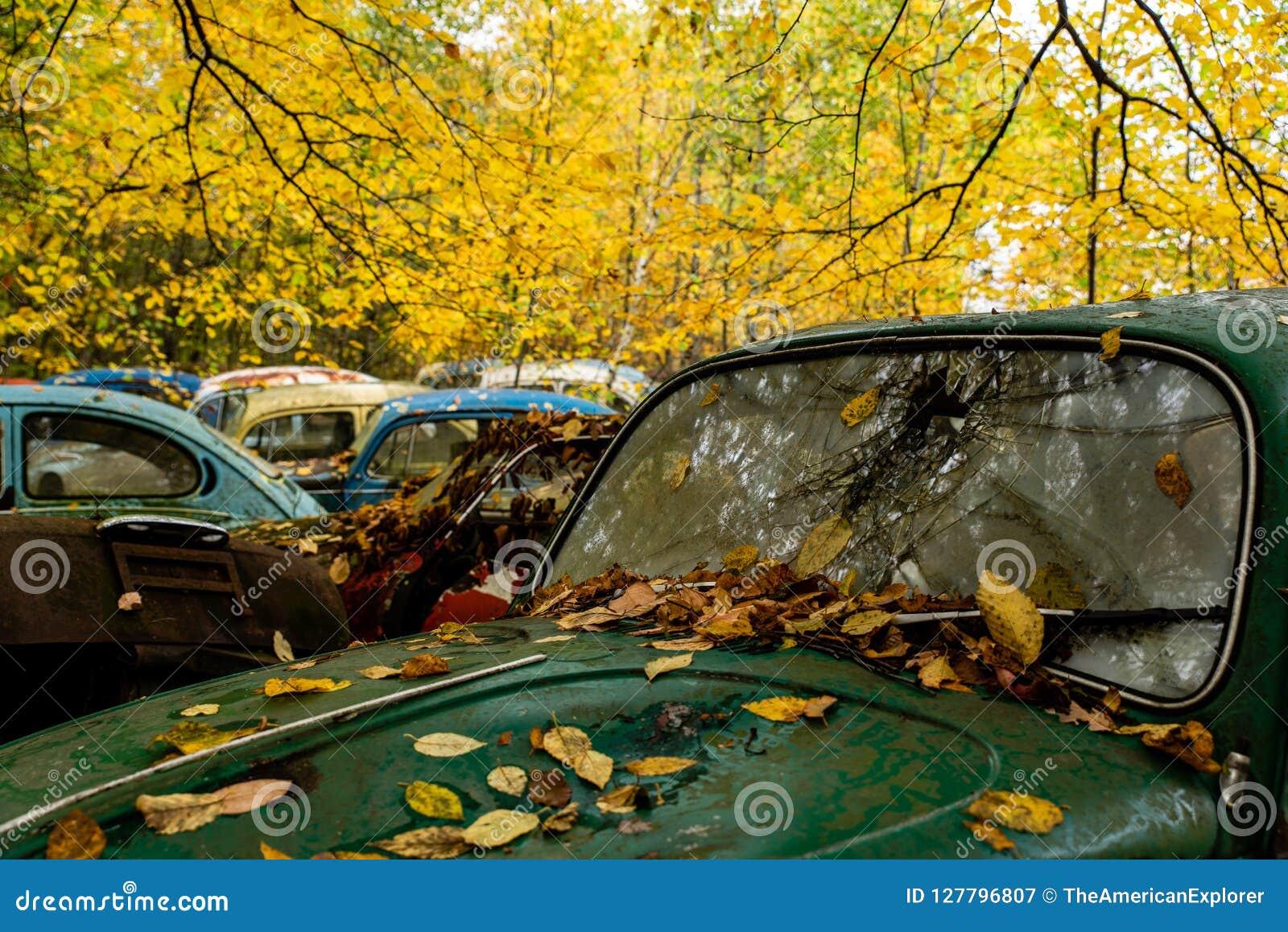 Scarabeo d annata di VW - tipo I di Volkswagen - rottamaio della Pensilvania