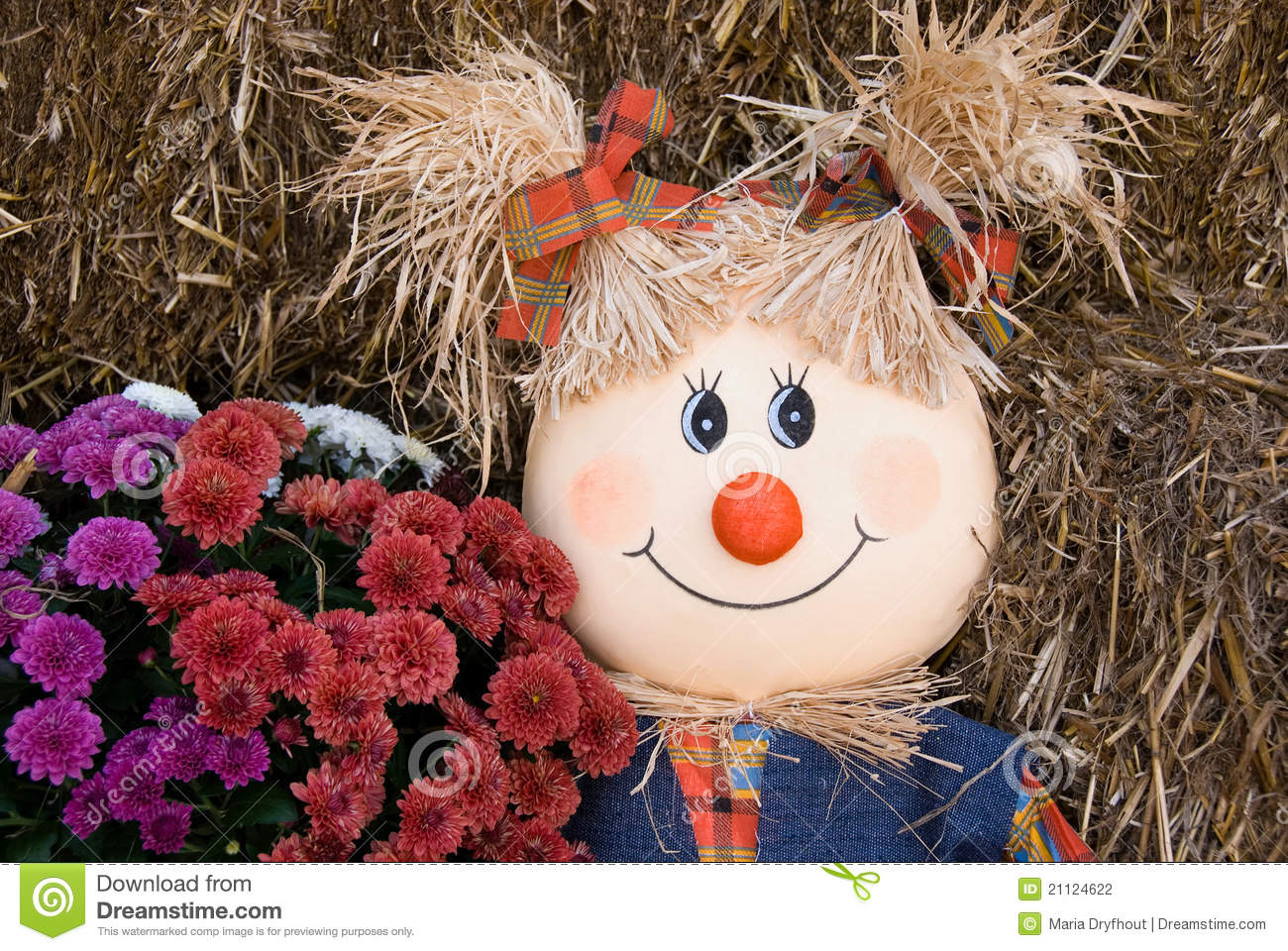 Scarecrow with fall mums