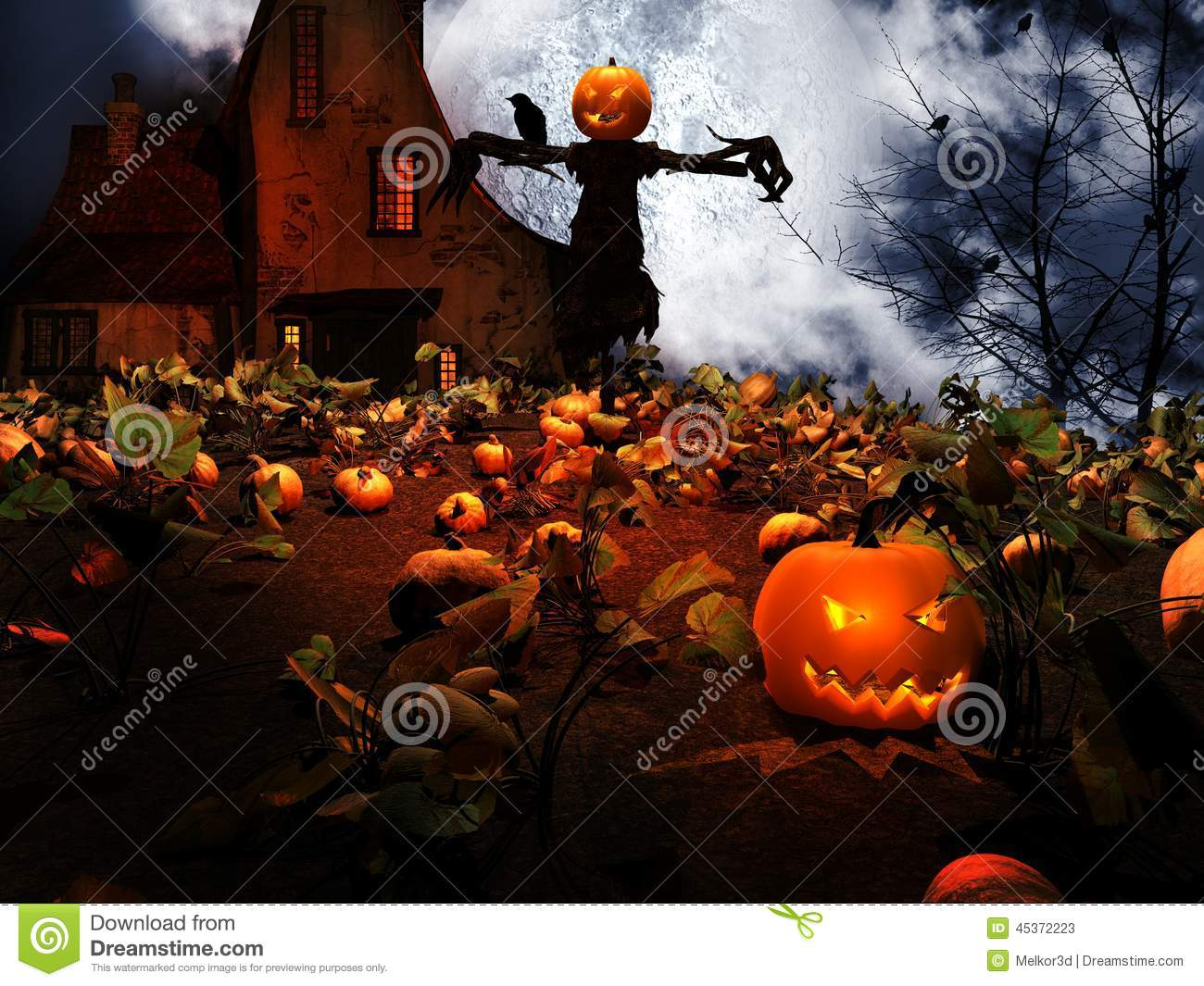 Scarecrow in the field of pumpkins