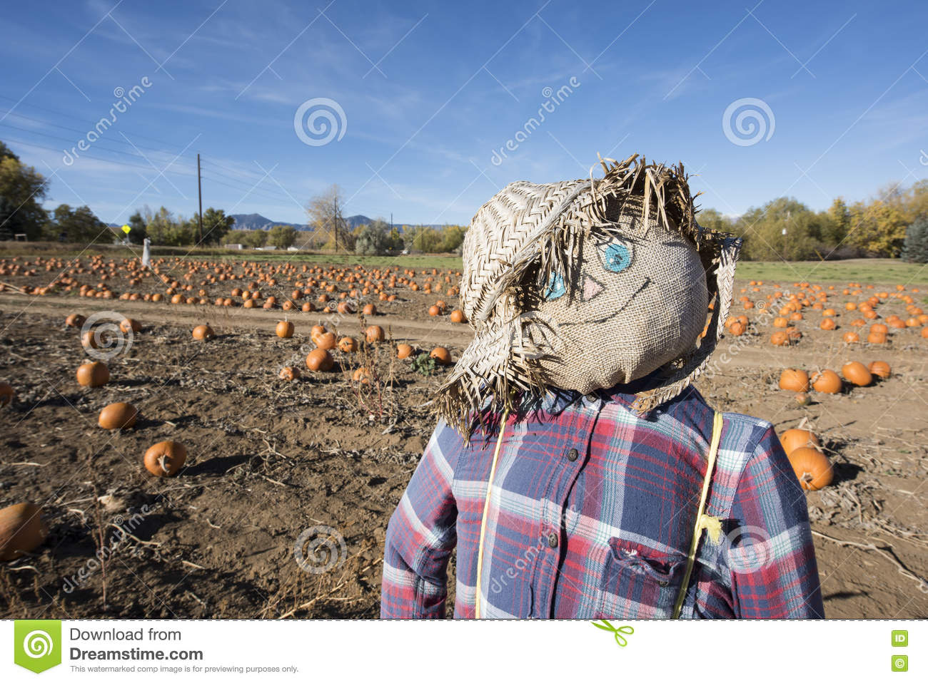 Scarecrow in the pumpkin patch