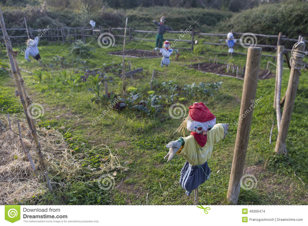 Scarecrow in a vegetable garden stock photo image 49306474 - Countryside dream gardens ...