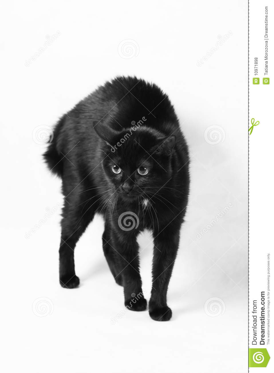 Scared Black Cat Royalty Free Stock Photos - Image: 10971898