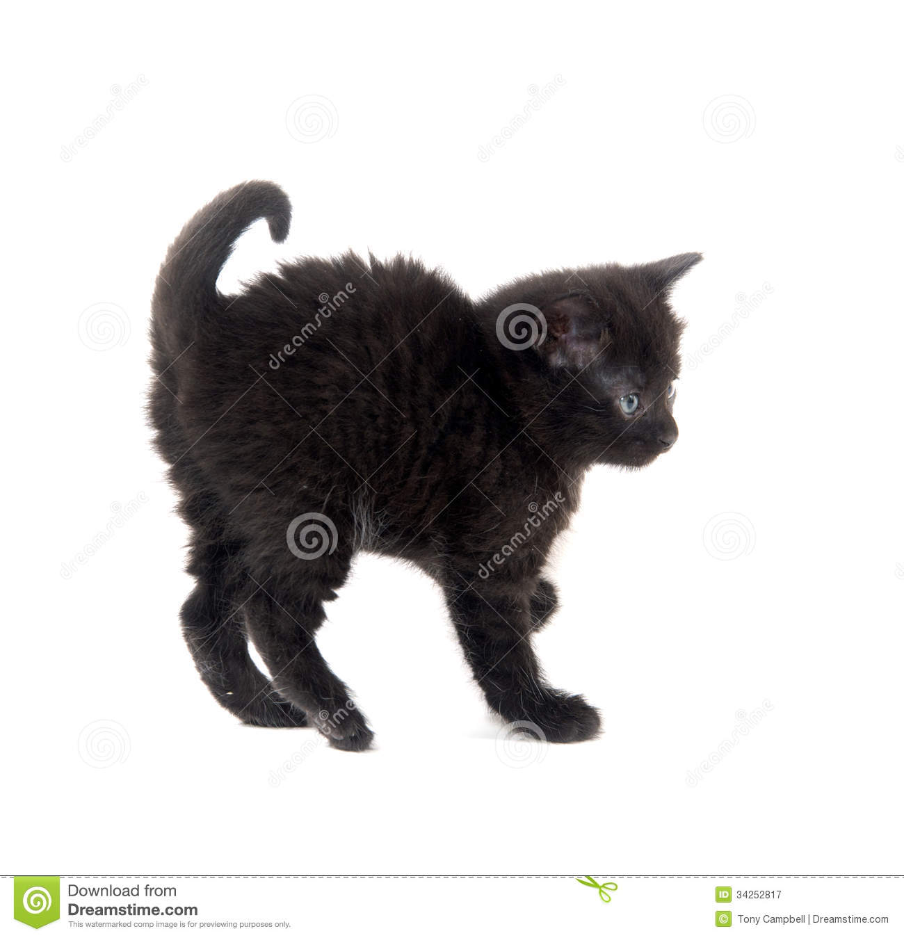 Scared black kitten stock image. Image of adorable, single ...