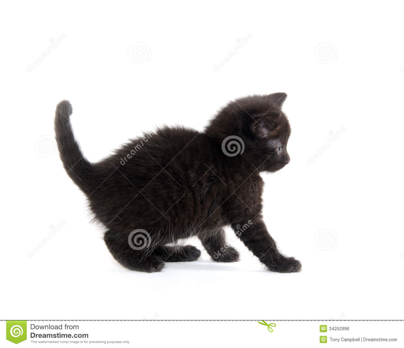 Scared black kitten stock photo. Image of cute, animal ...