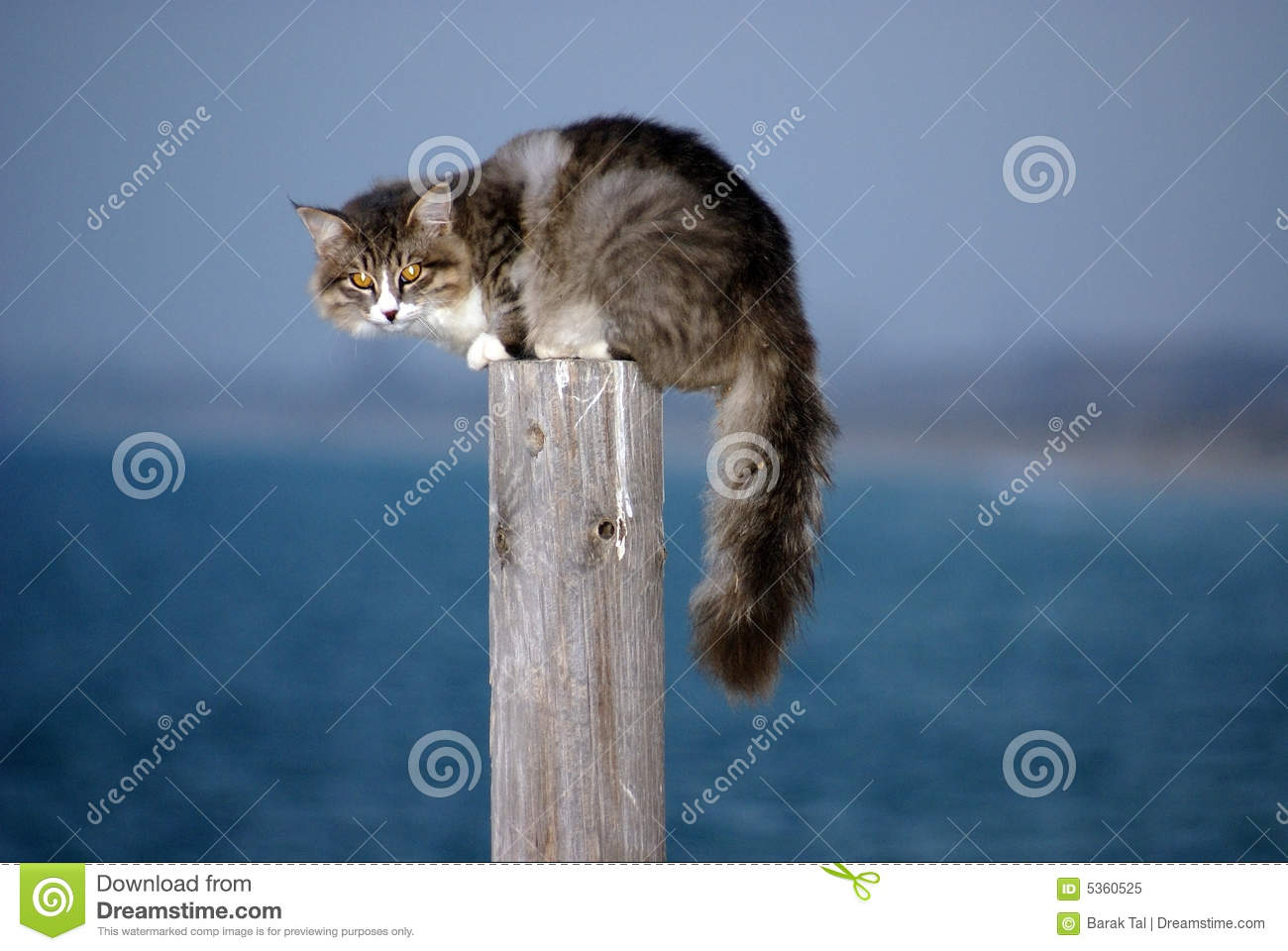 Scared Cat Royalty Free Stock Photo Image 5360525