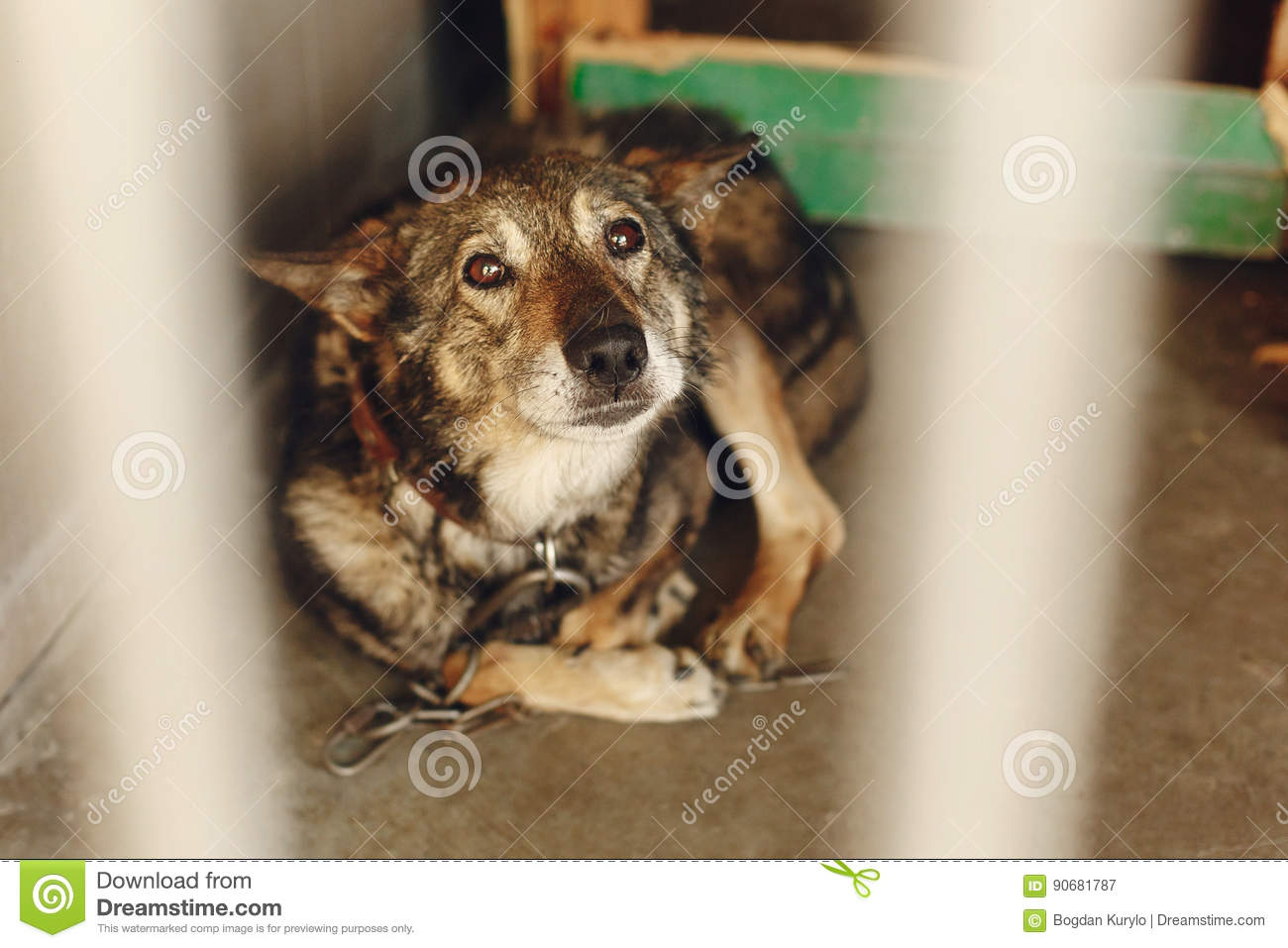 Scared dog in shelter cage with sad crying eyes emotional mome stock image image 90681787 - Dogs for small spaces concept ...