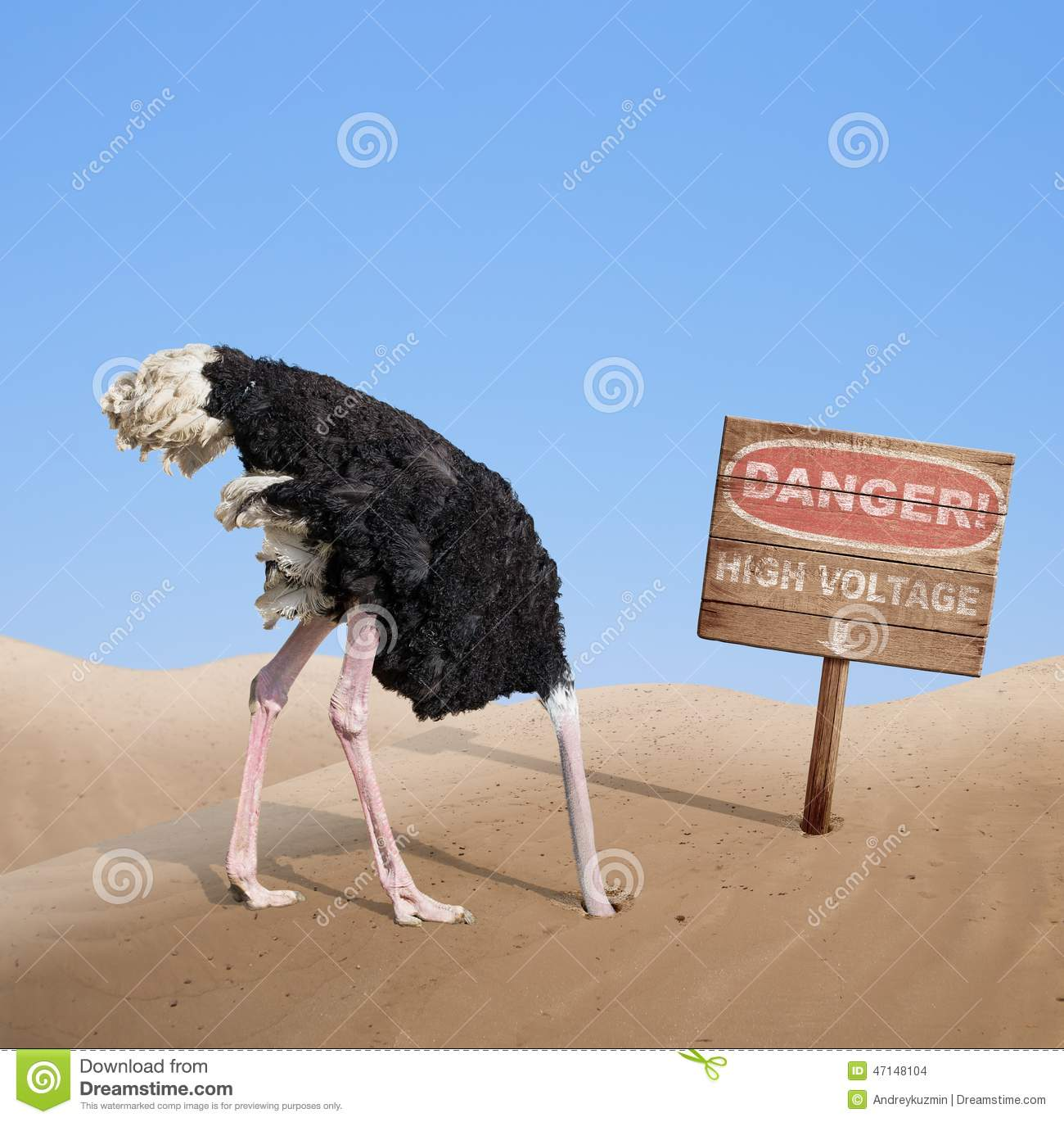 how to buy an ostrich