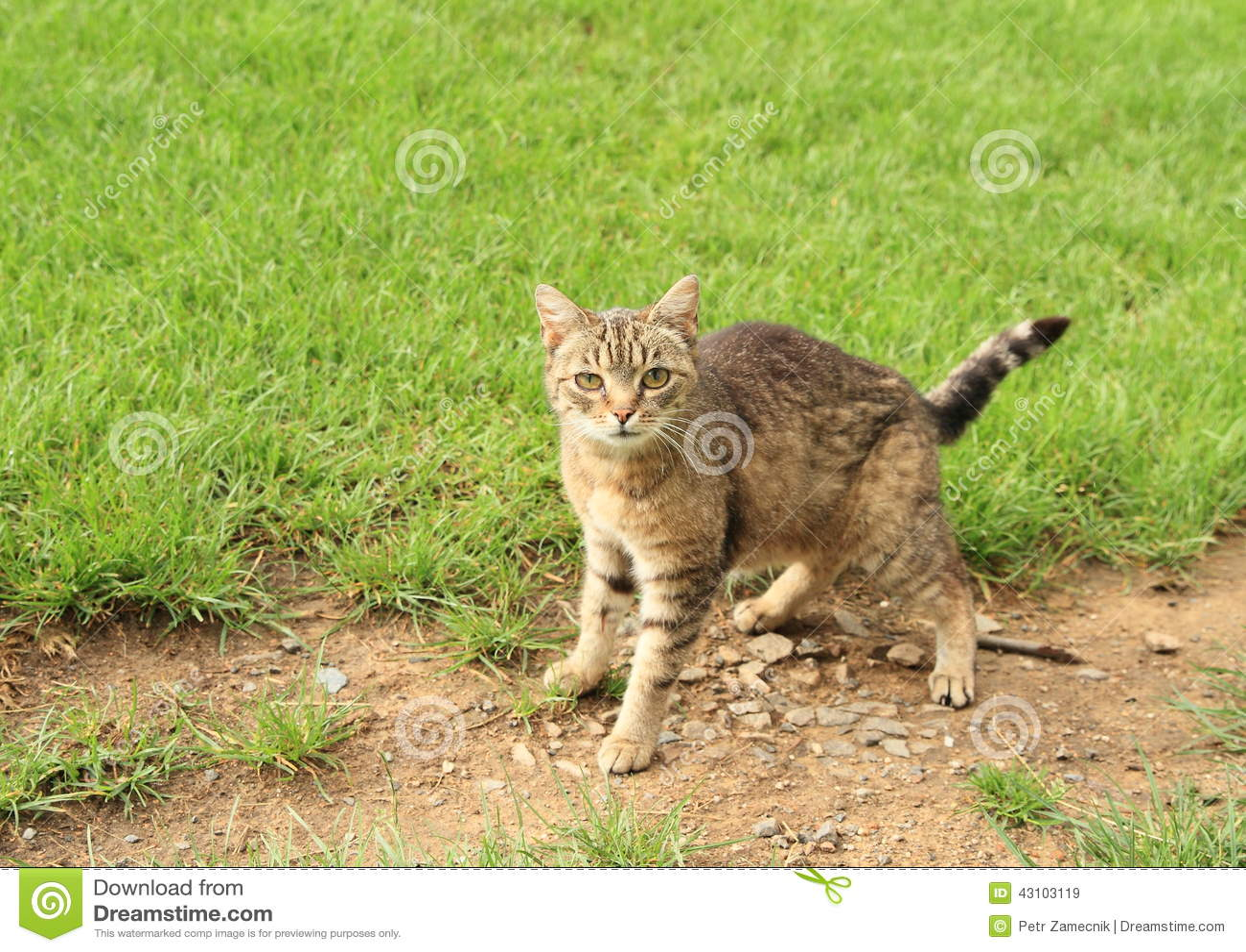 Scared tabby cat