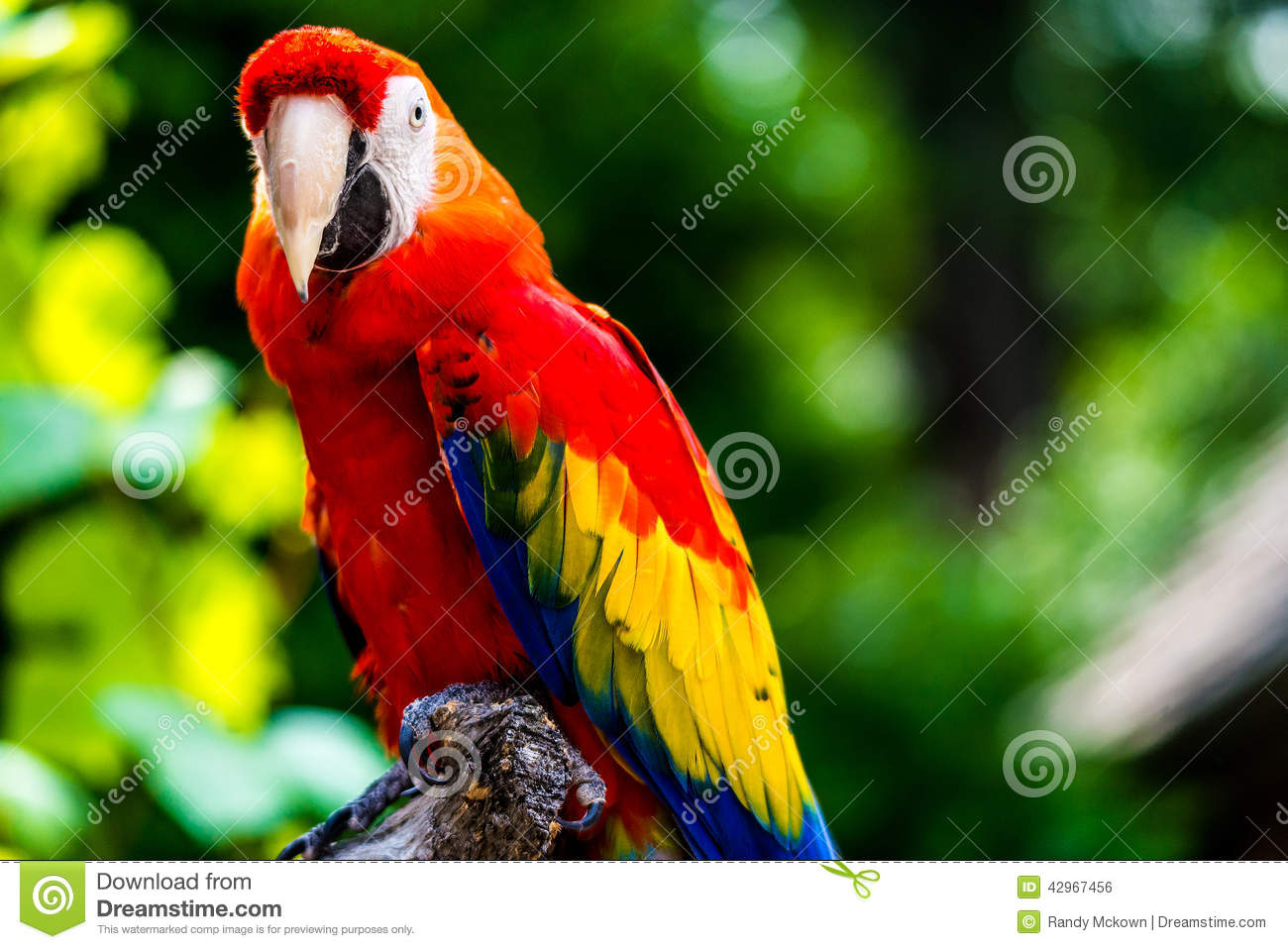 Macaw Care Guide All about Macaws  Animal World