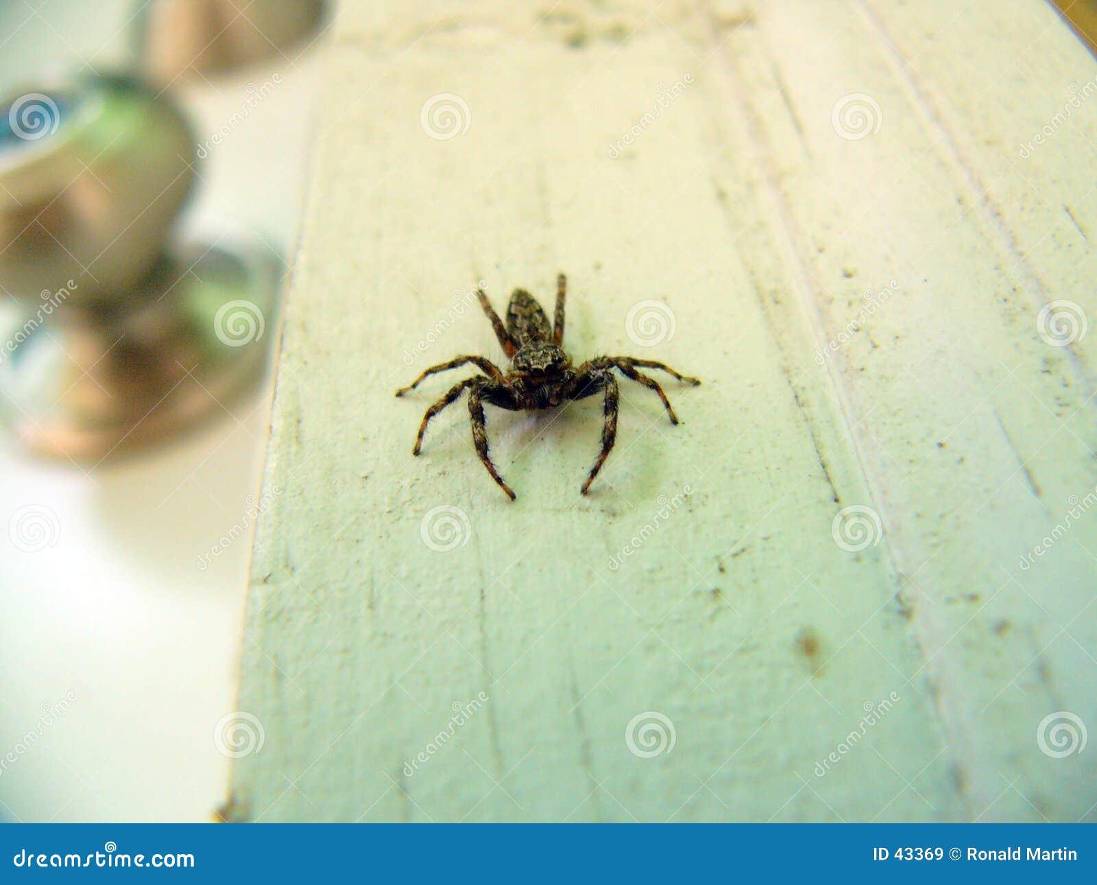 Scarry蜘蛛
