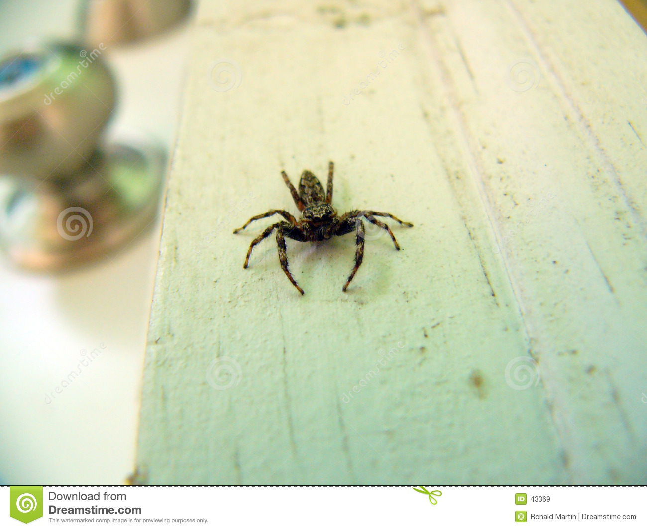 Scarry Spinne