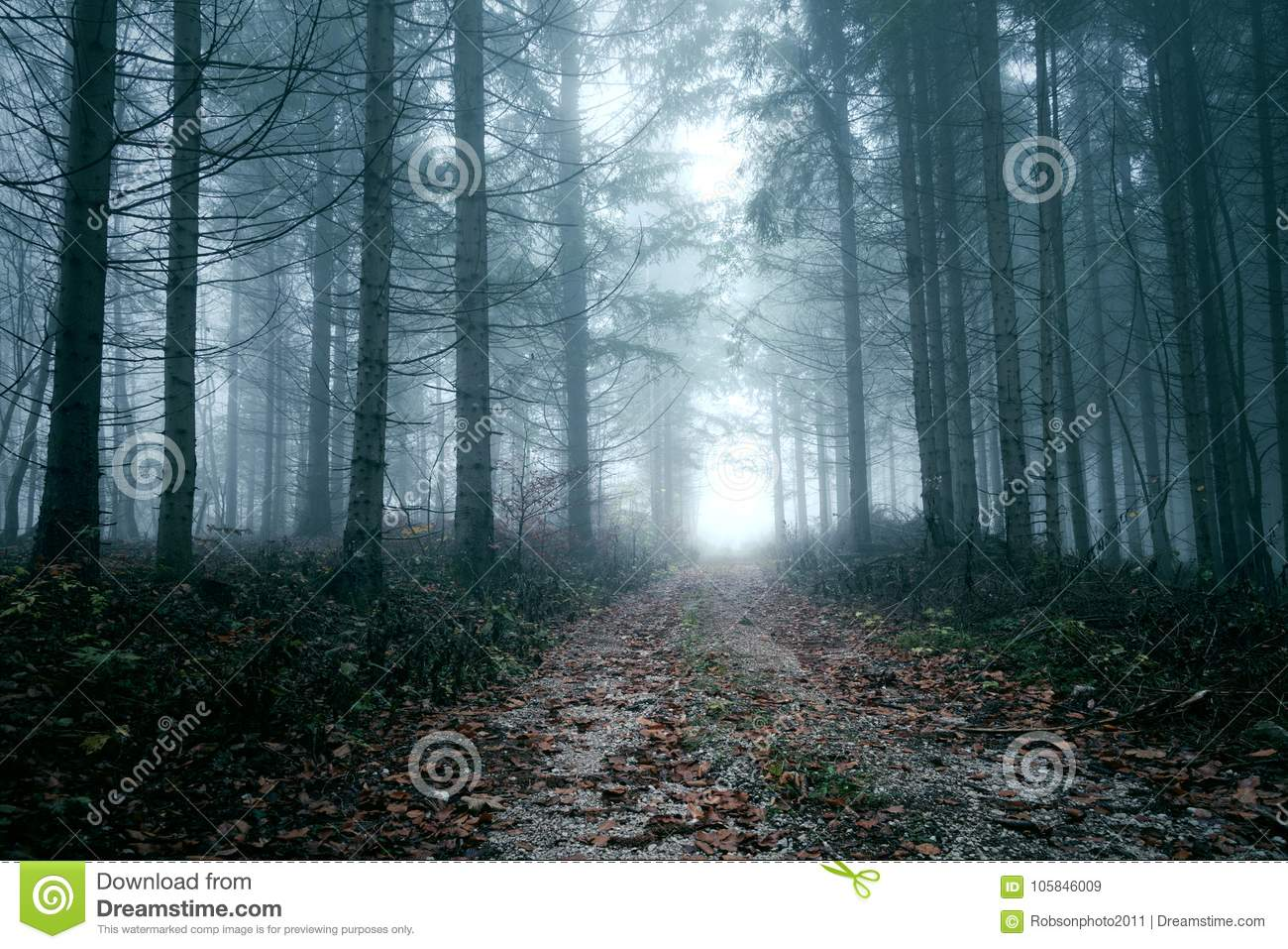 Dark Scary Foggy Forest Road Stock Image Image Of Mist Autumnal 105846009 Autumn fog trees forest alley road