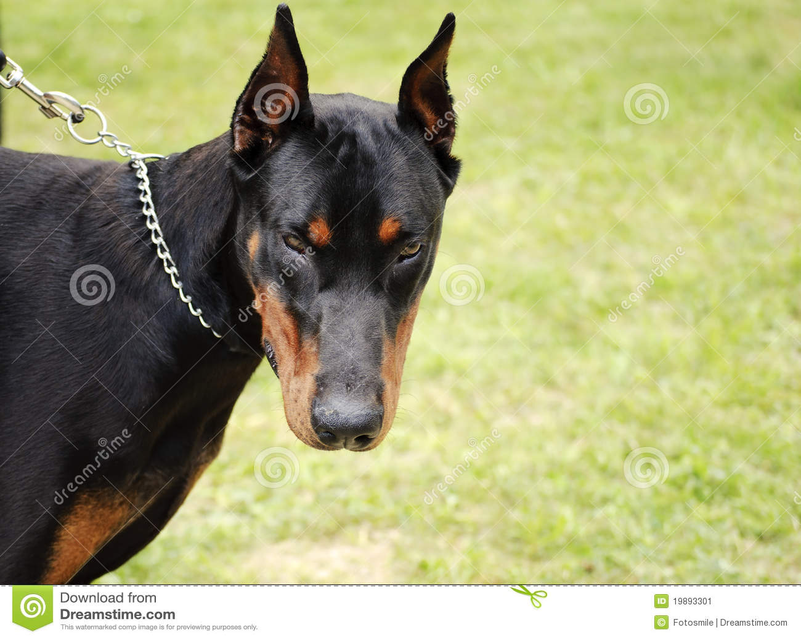 Scary Black Dog Breed