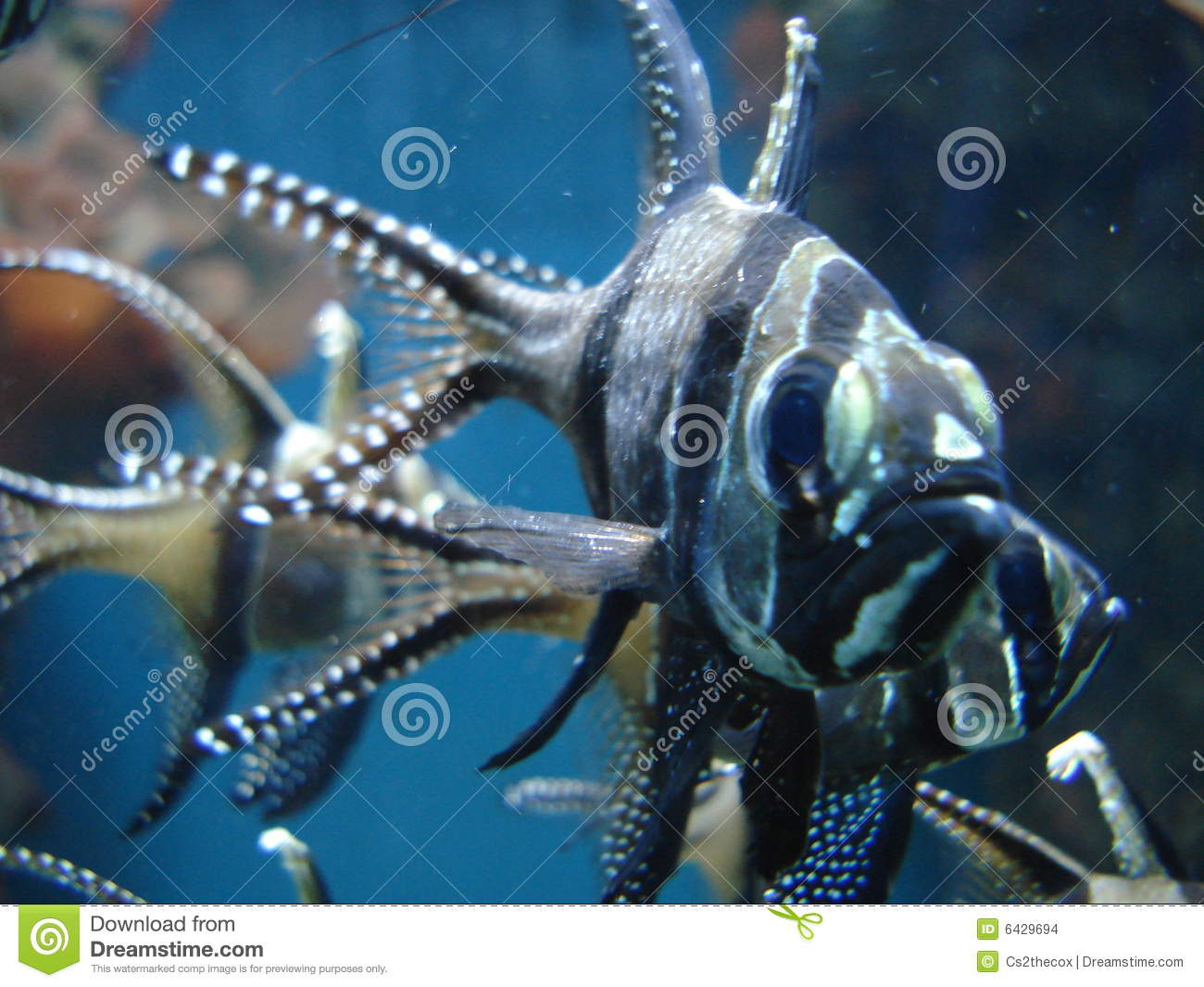 Scary Fish Stock Images - Image: 6429694