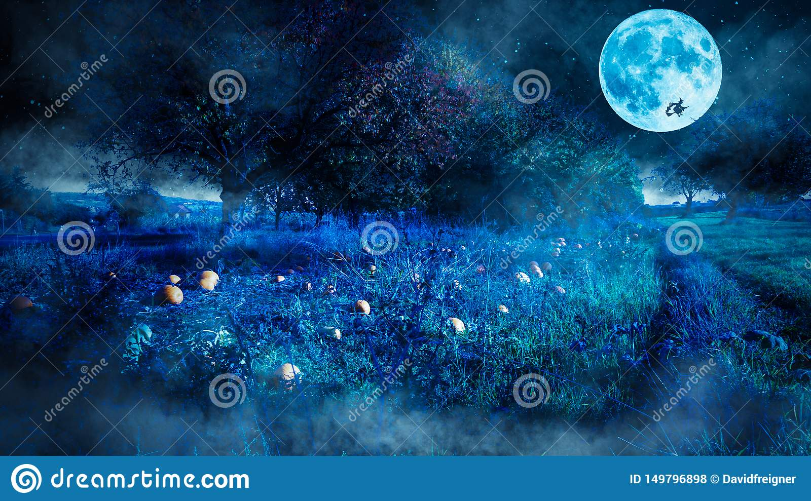 Scary halloween night scene with  a pumpkin field and a flying witch as a silhouette before the full moon