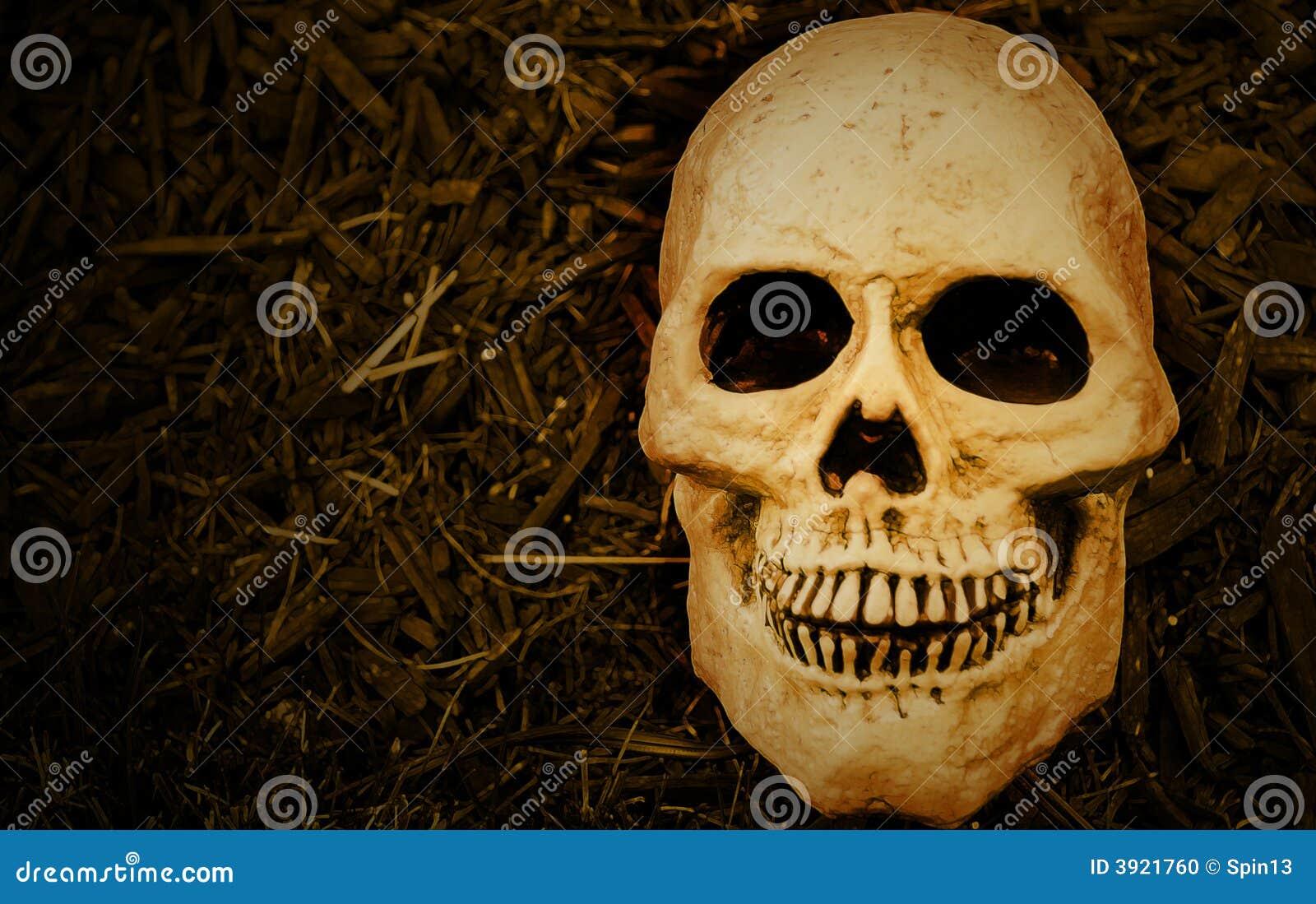Scary Halloween Skull Stock Photo - Image: 3921760