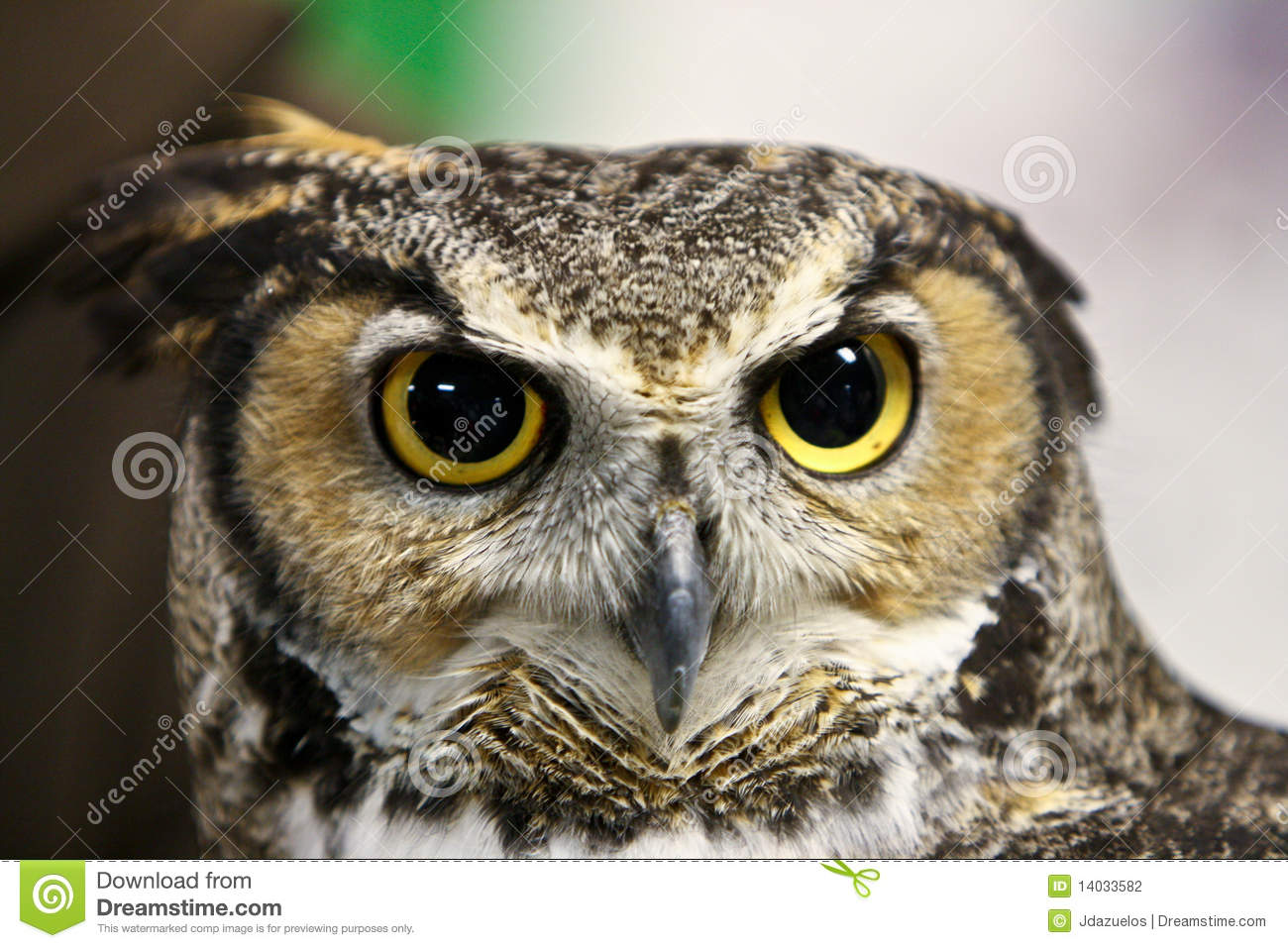 Scary owl face