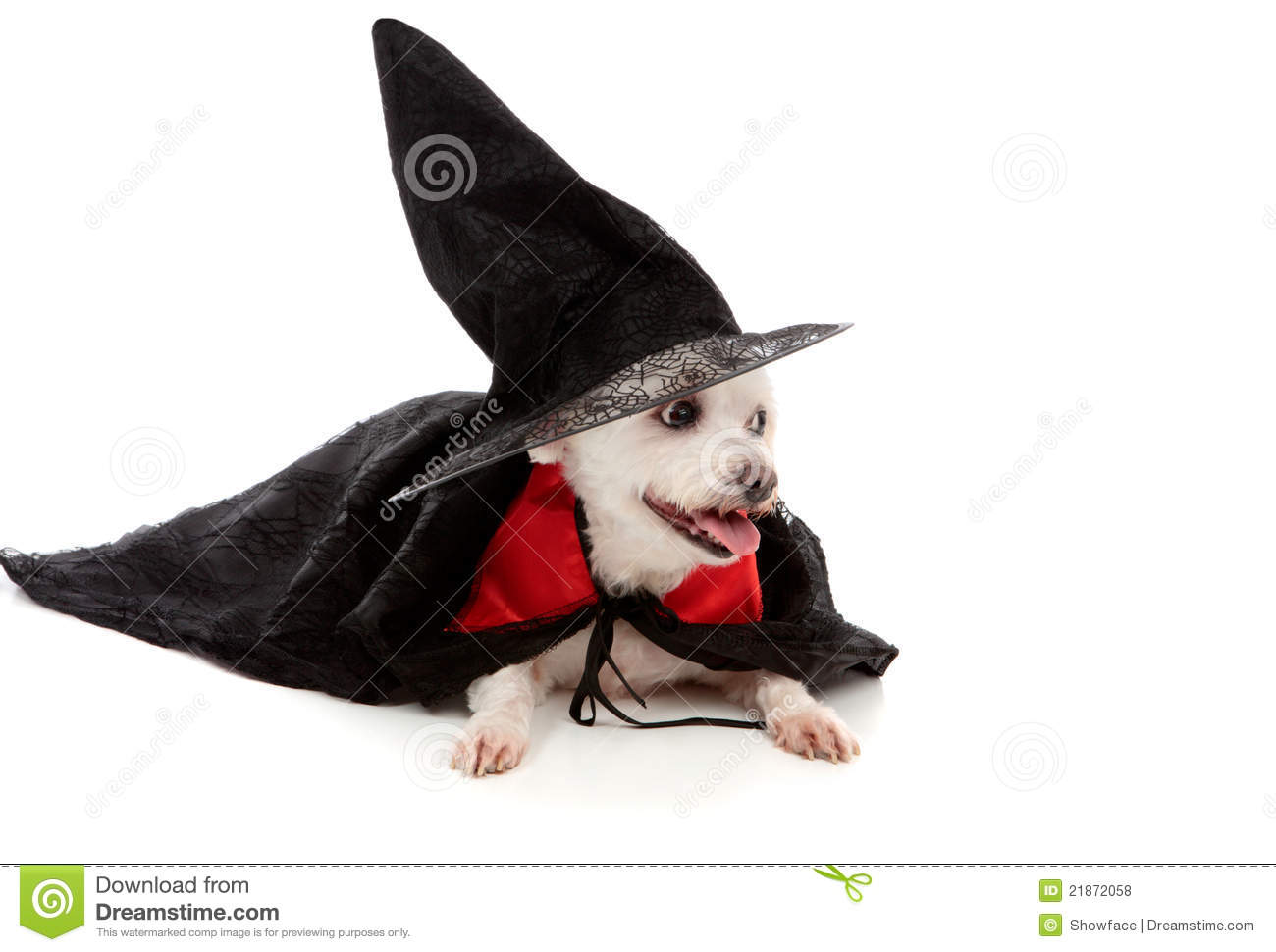 Dog Witch Costume Picture