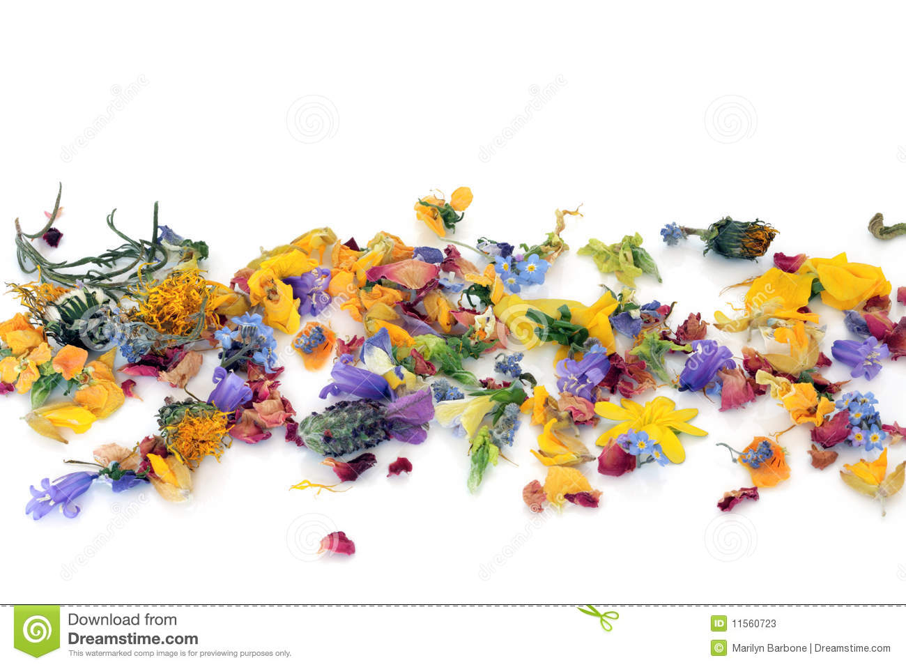 Scattered Flowers And Herbs Stock Photos Image 11560723