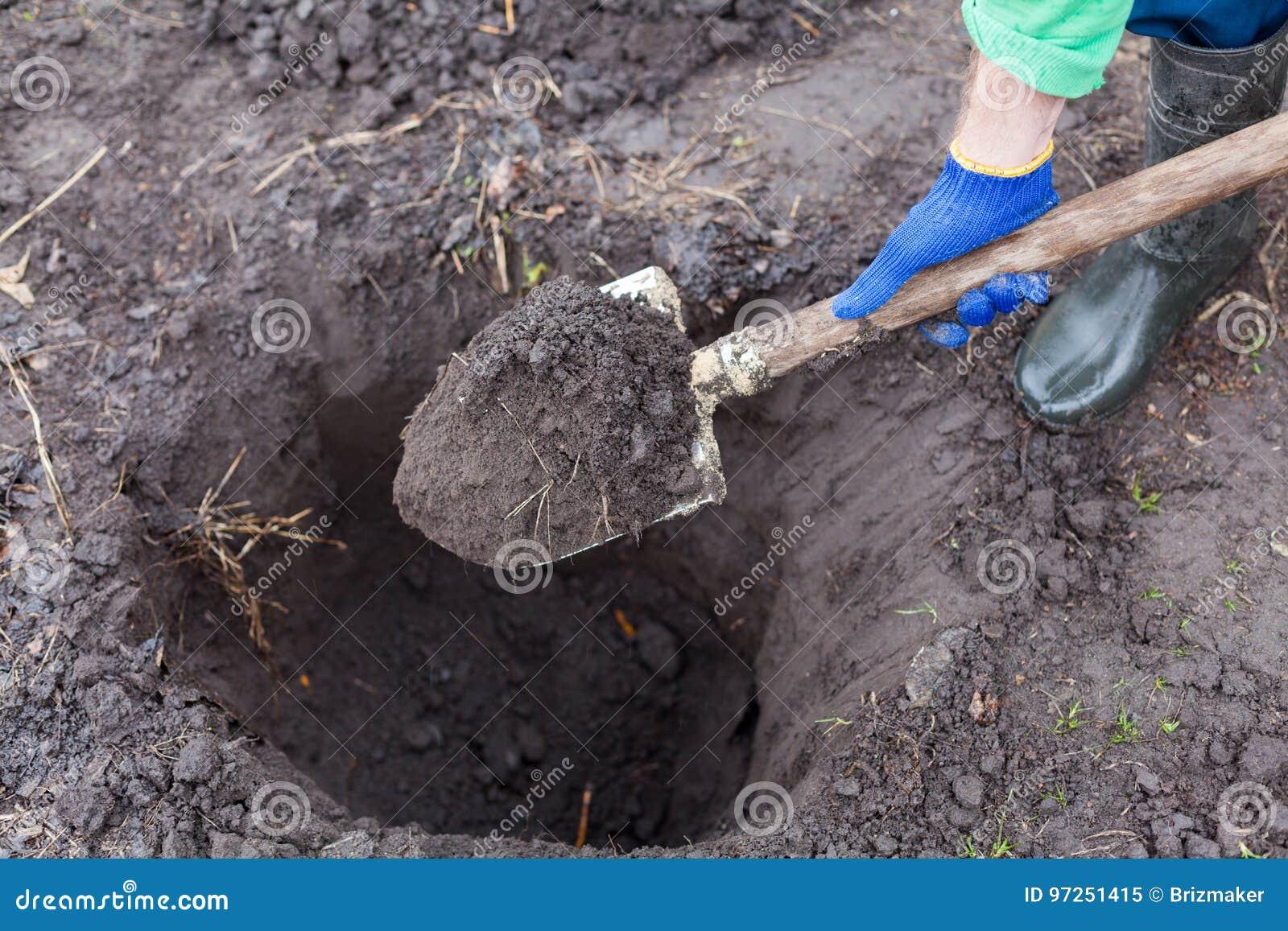 Scavando il foro per la piantatura del cespuglio in giardino