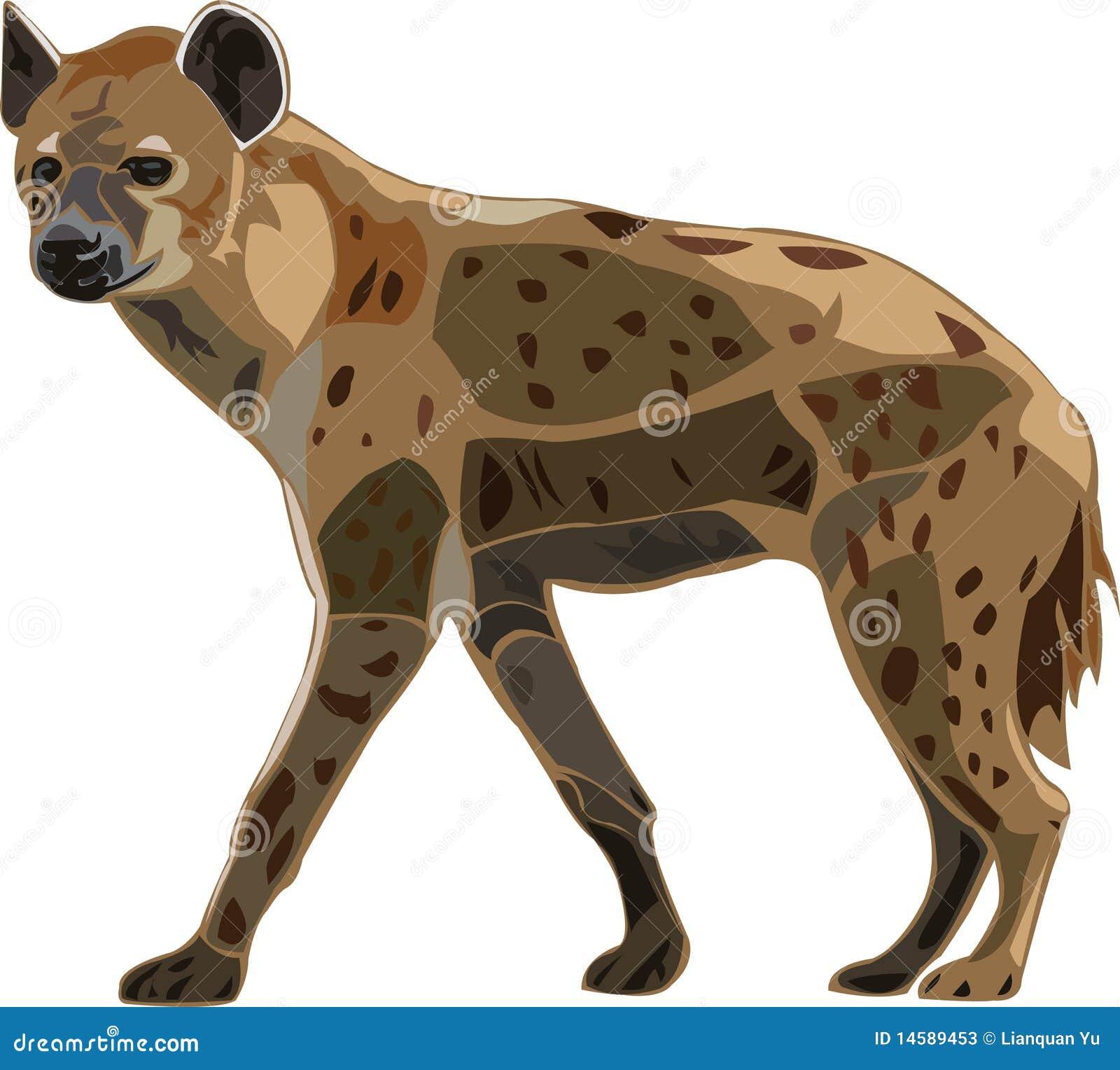 Scavenger On The African Grasslands - Spot Hyena Stock Photos - Image ...