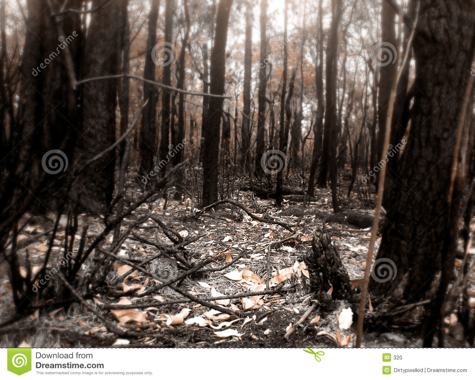 Scena del fuoco del Bush