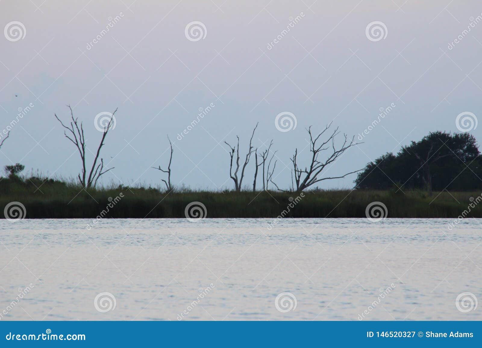Scena del ramo paludoso di fiume della Luisiana