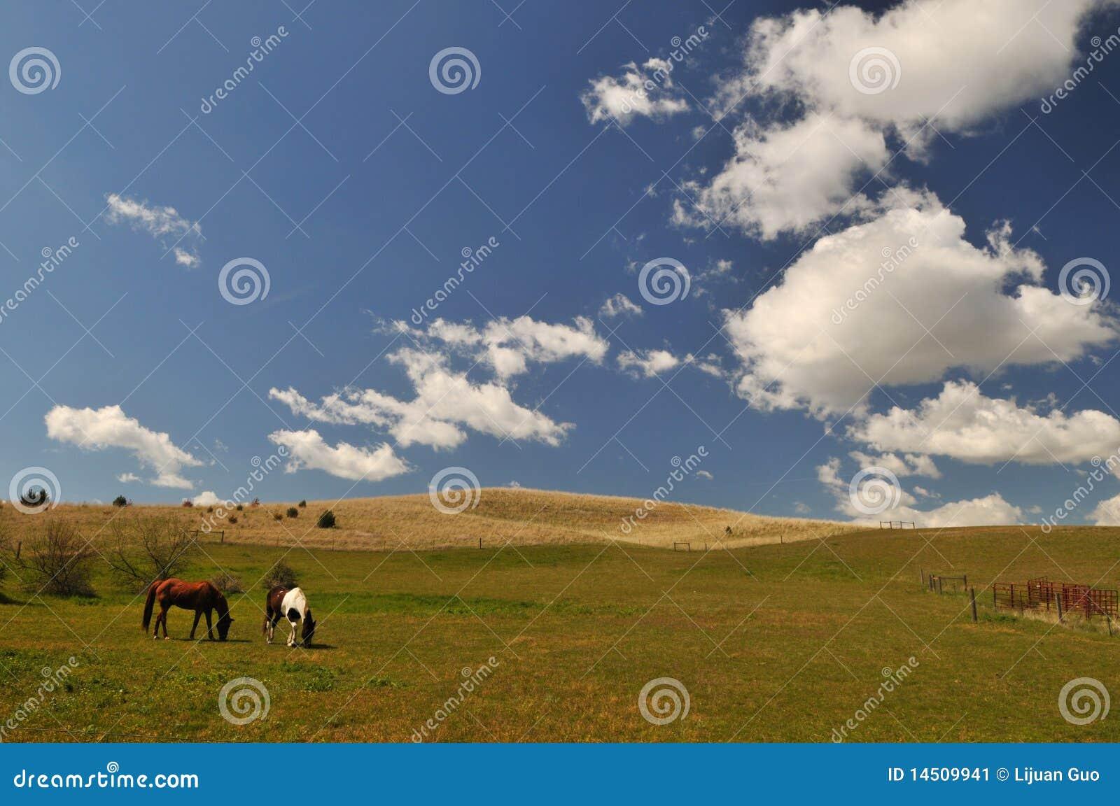 Scena della campagna della sorgente in Colfax