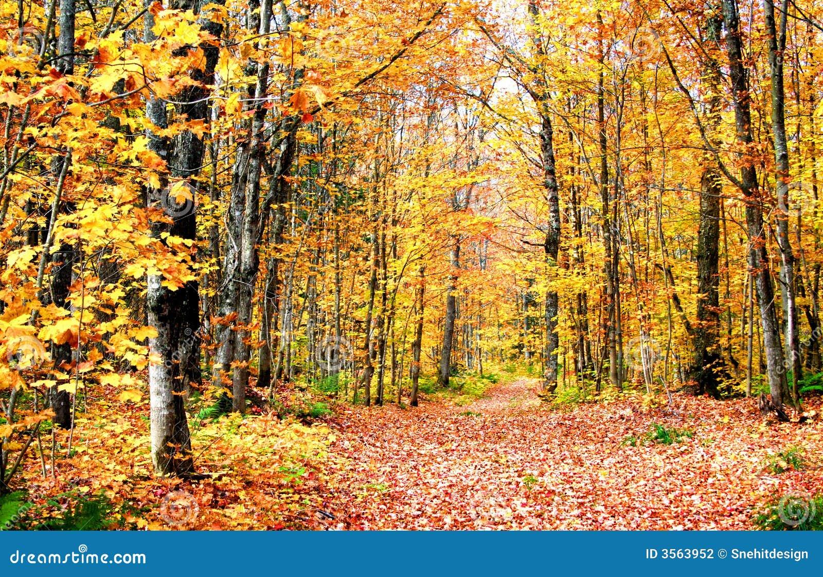 Scena di autunno