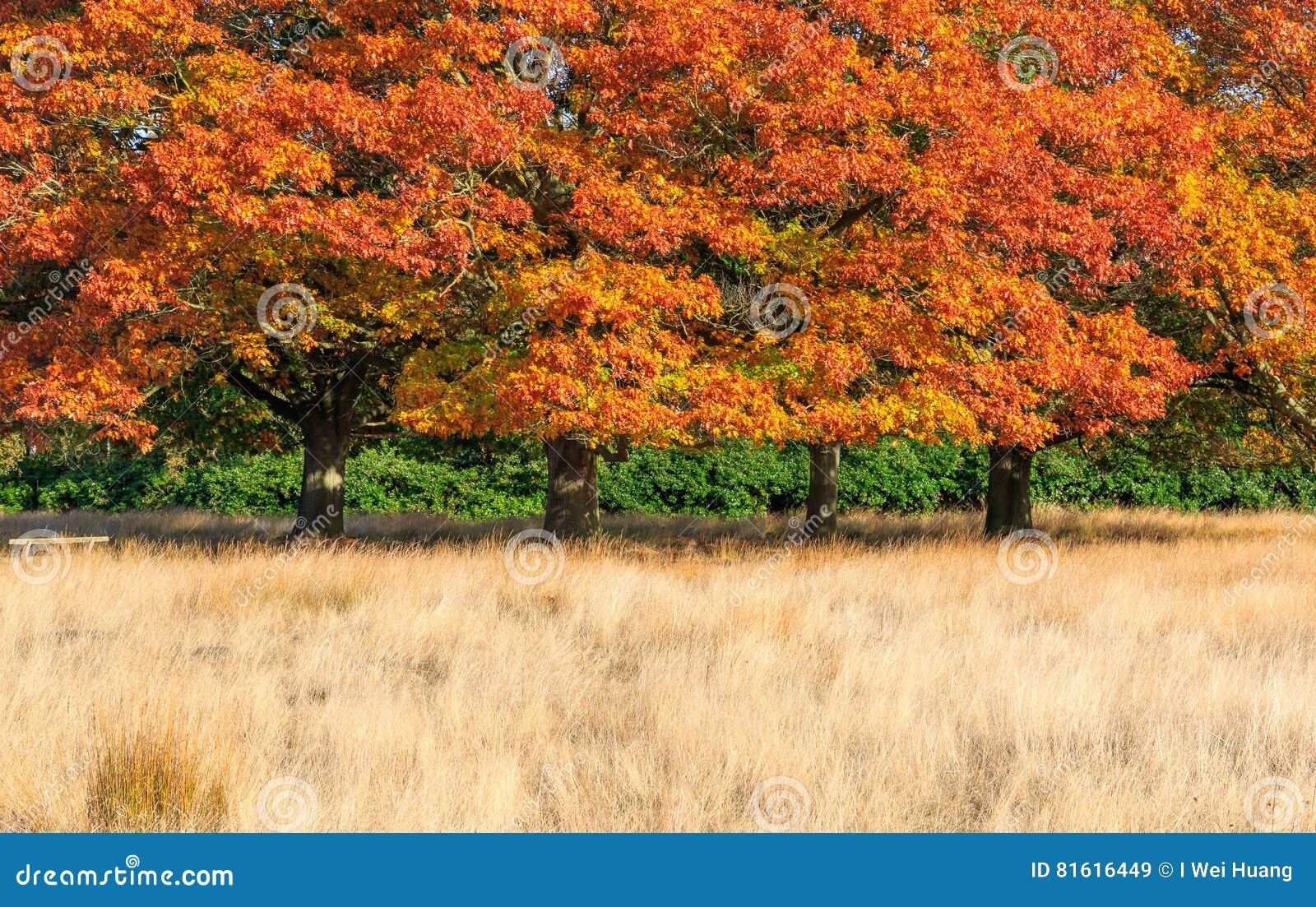 Scena di autunno in Richmond Park