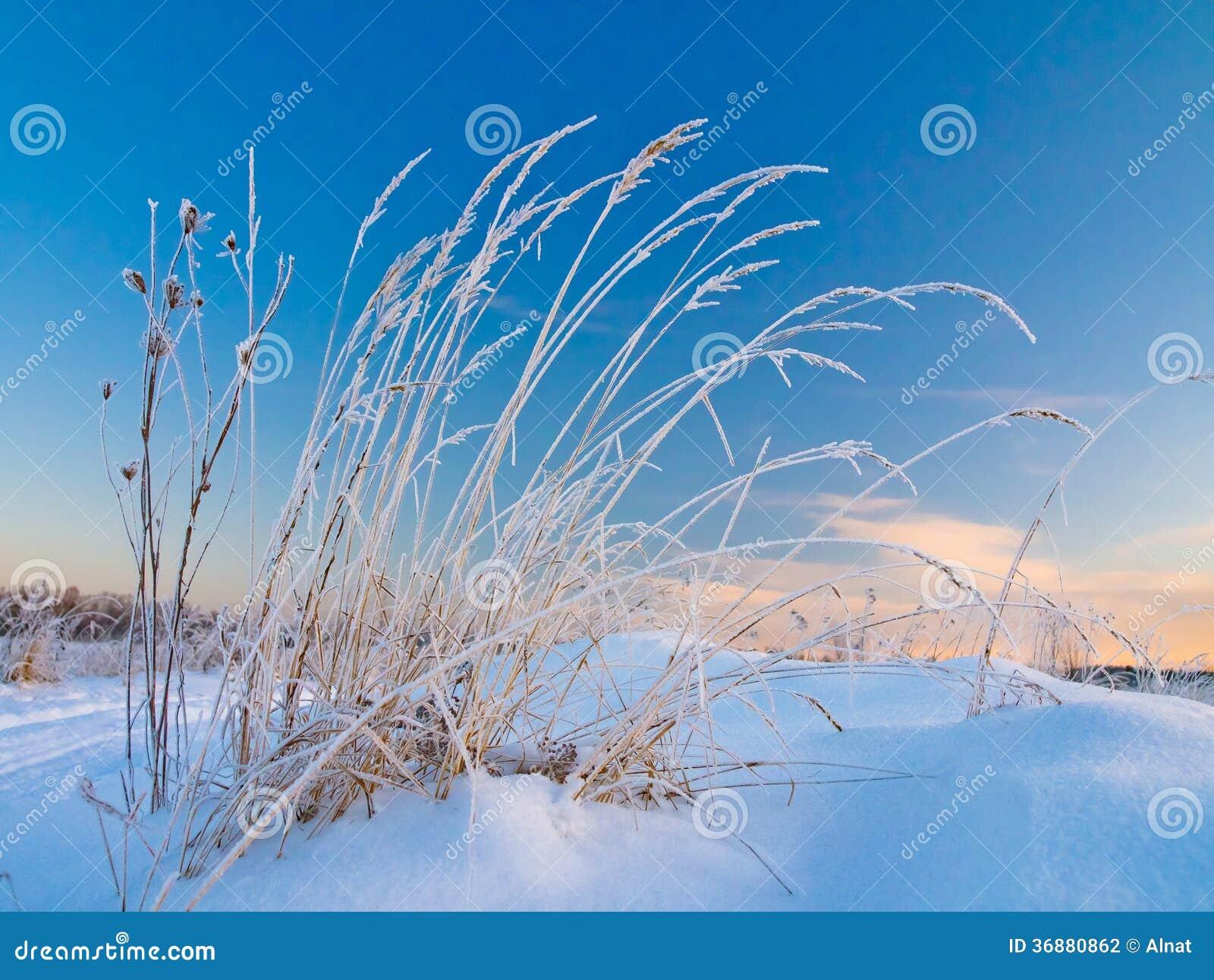 Download Scena di inverno fotografia stock. Immagine di paesaggio - 36880862