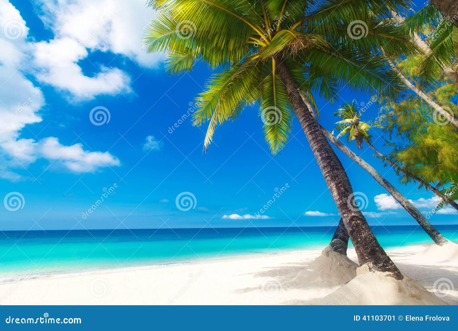 Scena di sogno Bella palma sopra la spiaggia bianca della sabbia Estate n