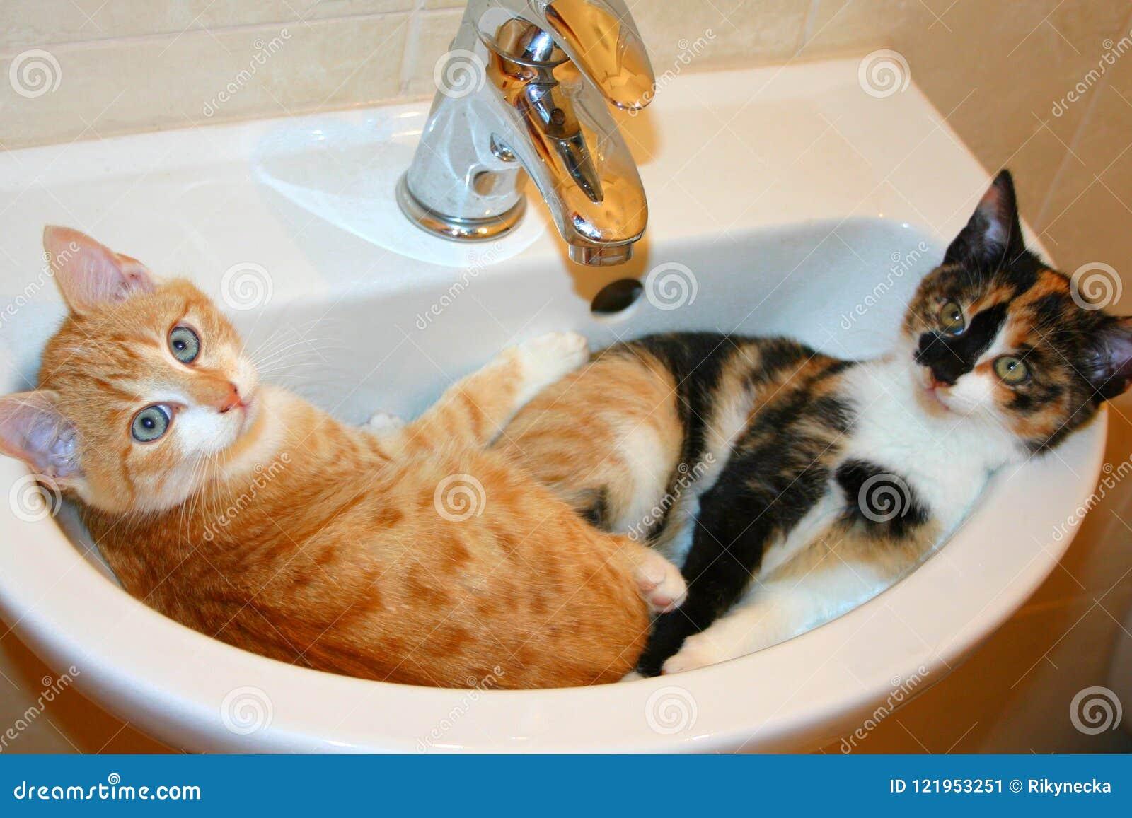 Scena Divertente Due Gattini Dormono In Un Lavandino è Foto