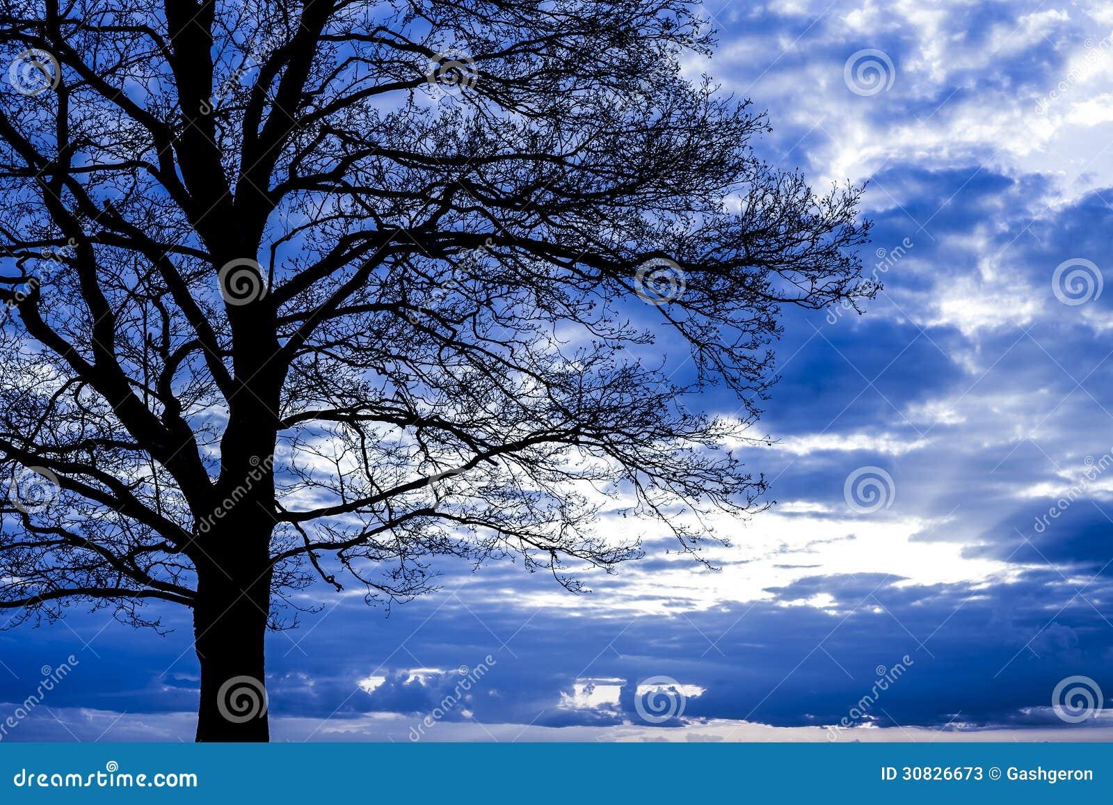 Scena drammatica con l albero.