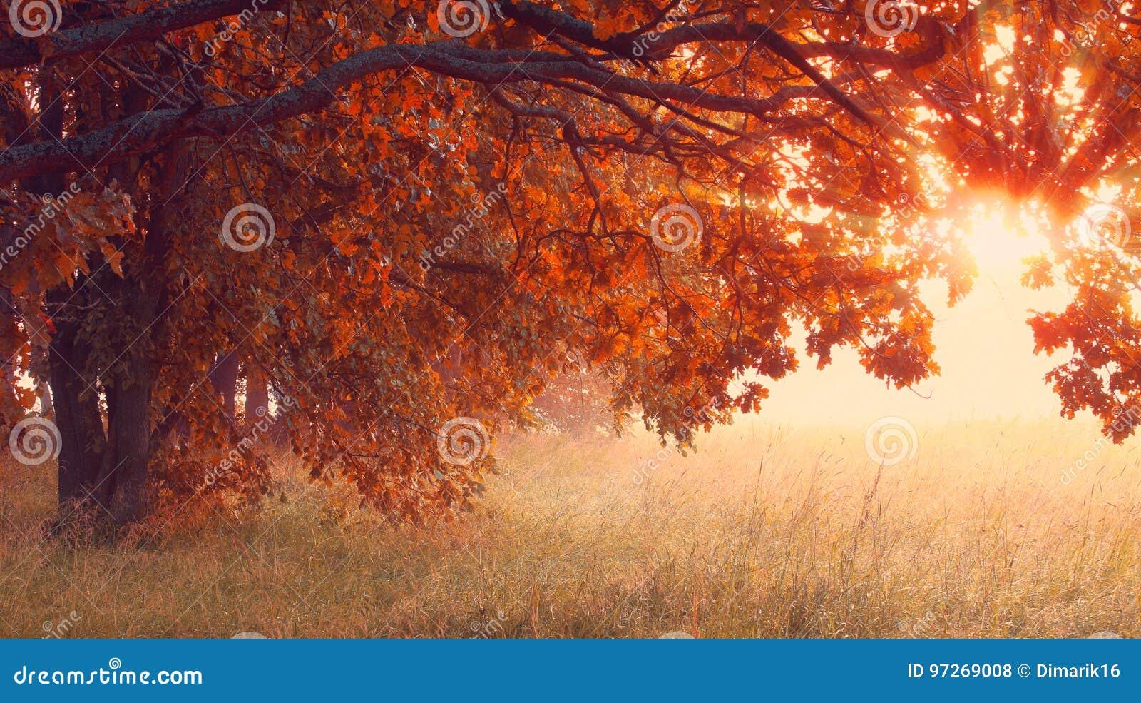 Scena piena di sole di autunno Santificare il fondo di tempo