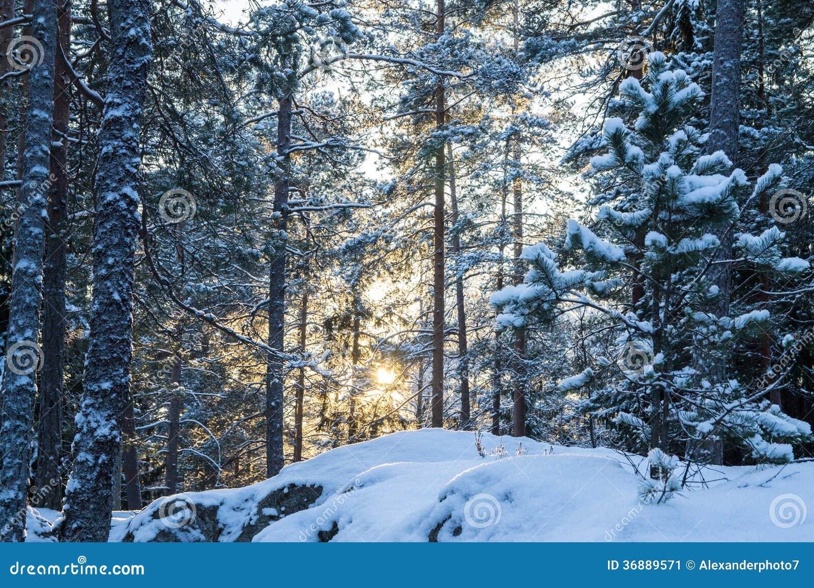 Download Scena Retroilluminata Di Inverno Immagine Stock - Immagine di luminoso, glowing: 36889571