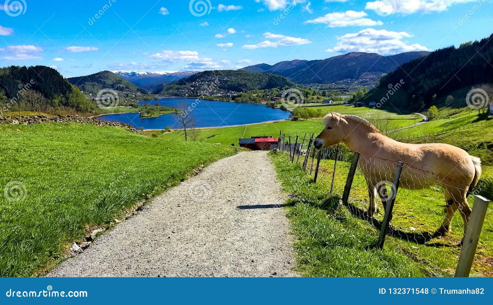 Scena rurale con Pony Standing su un prato dalla strada nella primavera