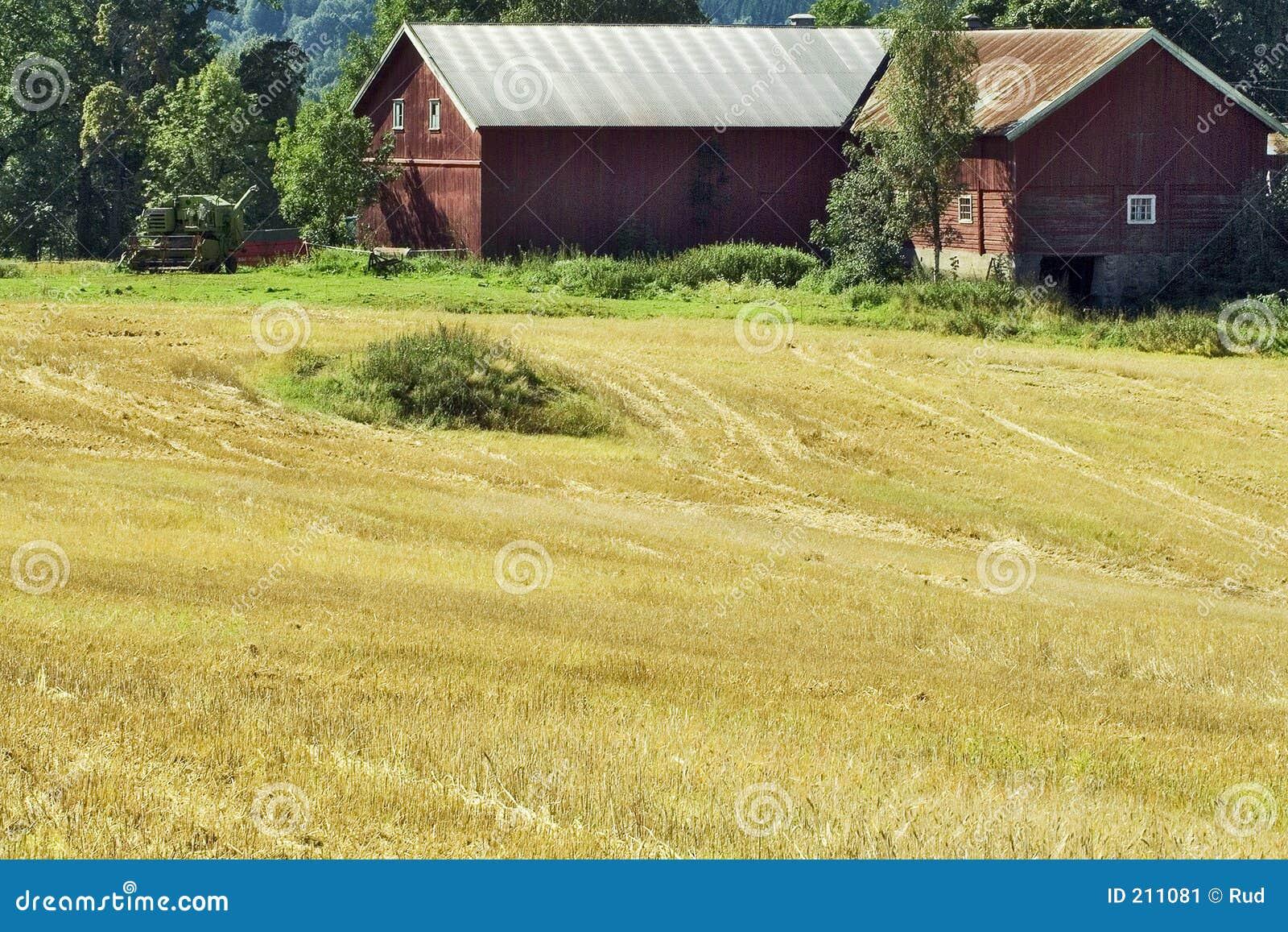 Scena wiejskiej