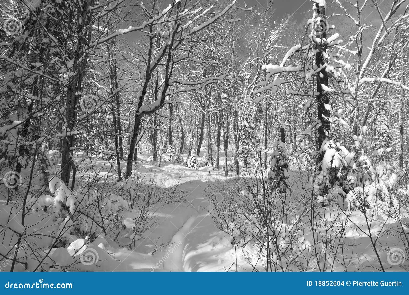 Scene di inverno in in bianco e nero immagini stock - Animali in inverno clipart ...
